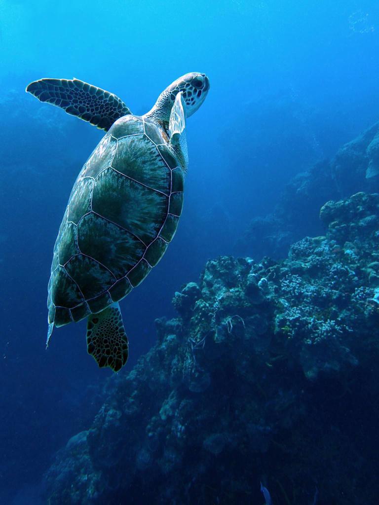 turtle-after.jpg