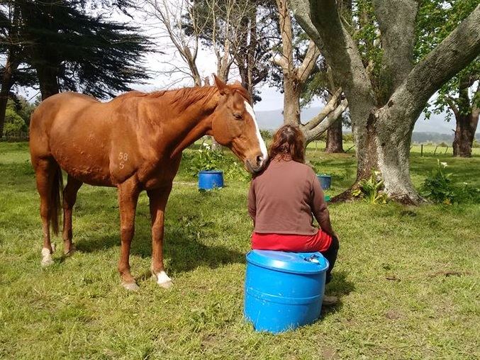 """But once I stepped aside from my own mental chatting, opened my mind, eyes, ears and started to feel the horses...then the magic started and it hasn't stopped.""    Training participant, Aotearoa"