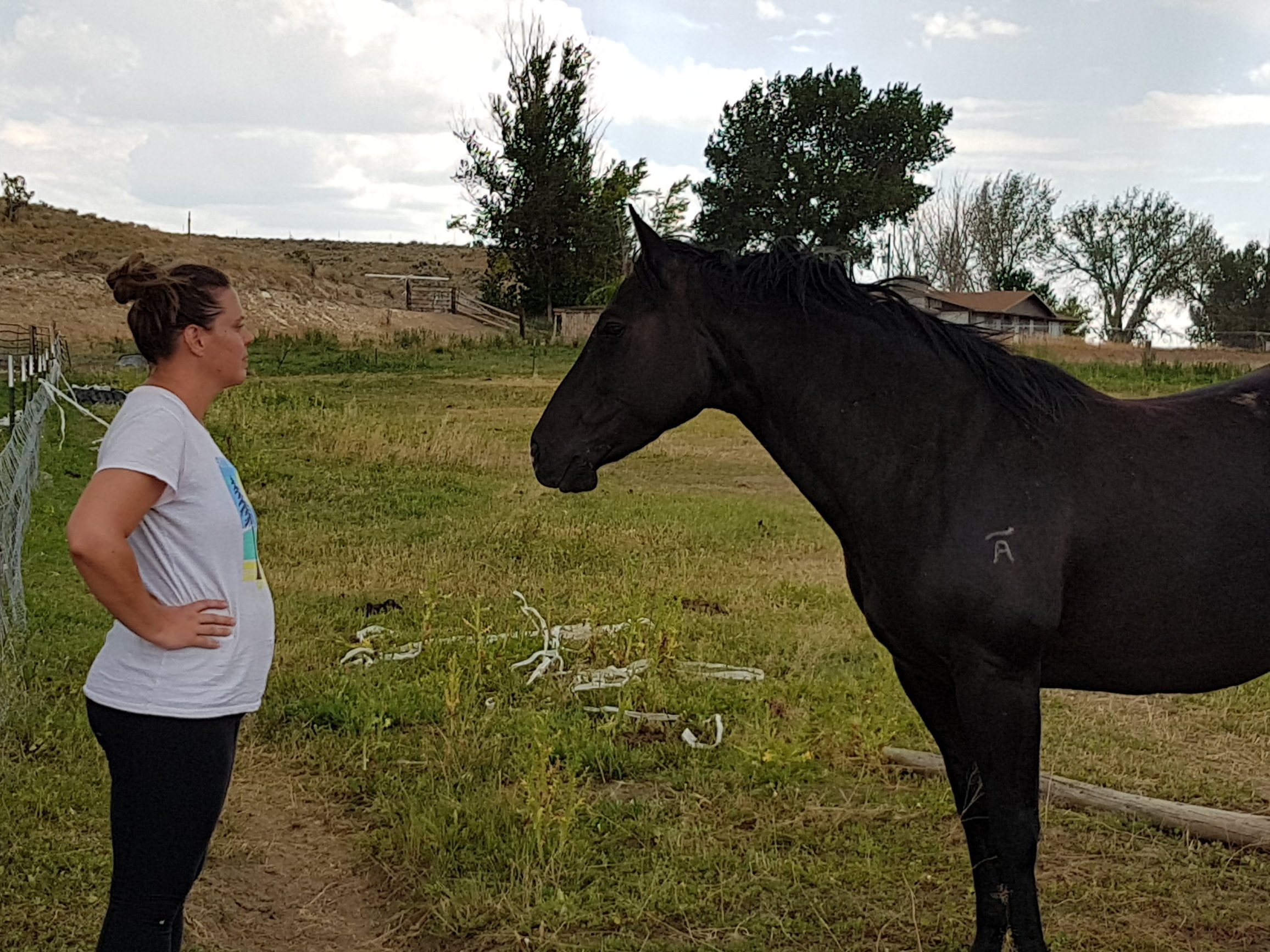 client and horse