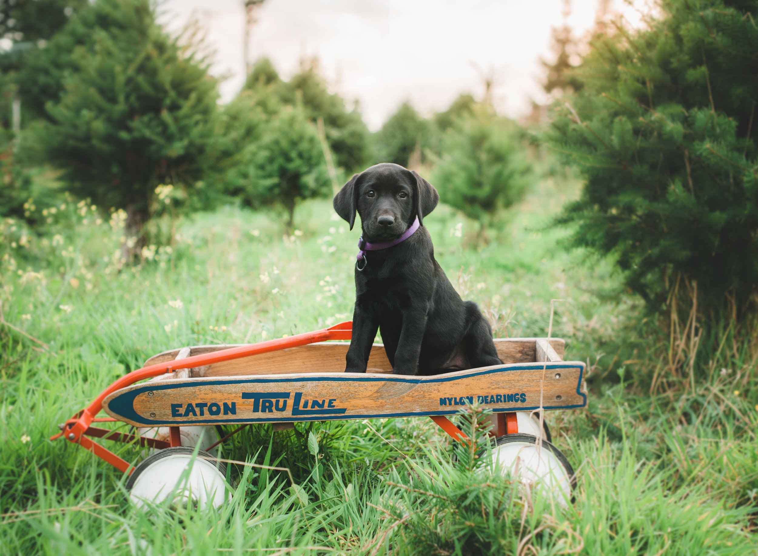 Joan - Puppies - 1.jpg