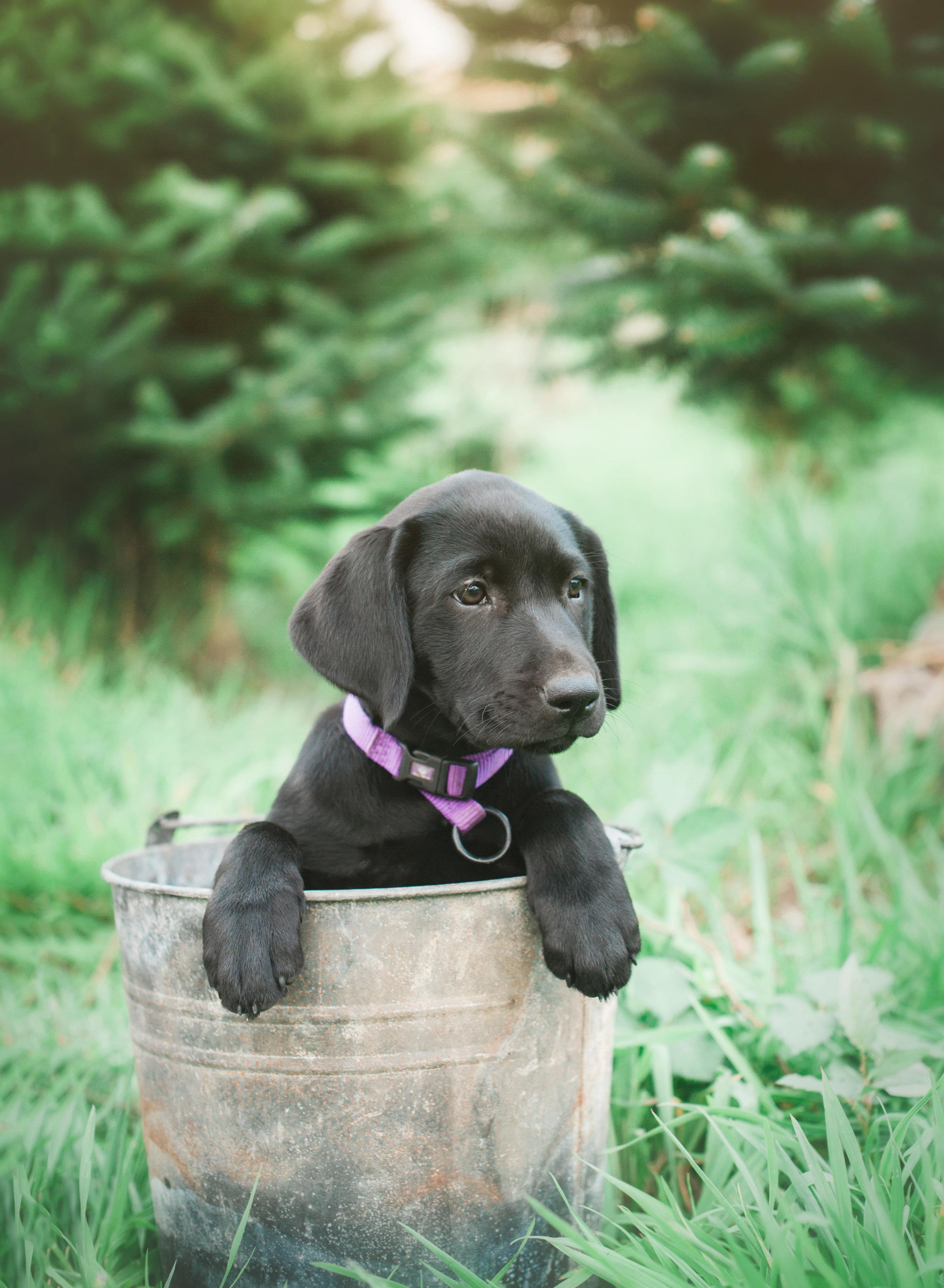 Joan - Puppies - 2.jpg