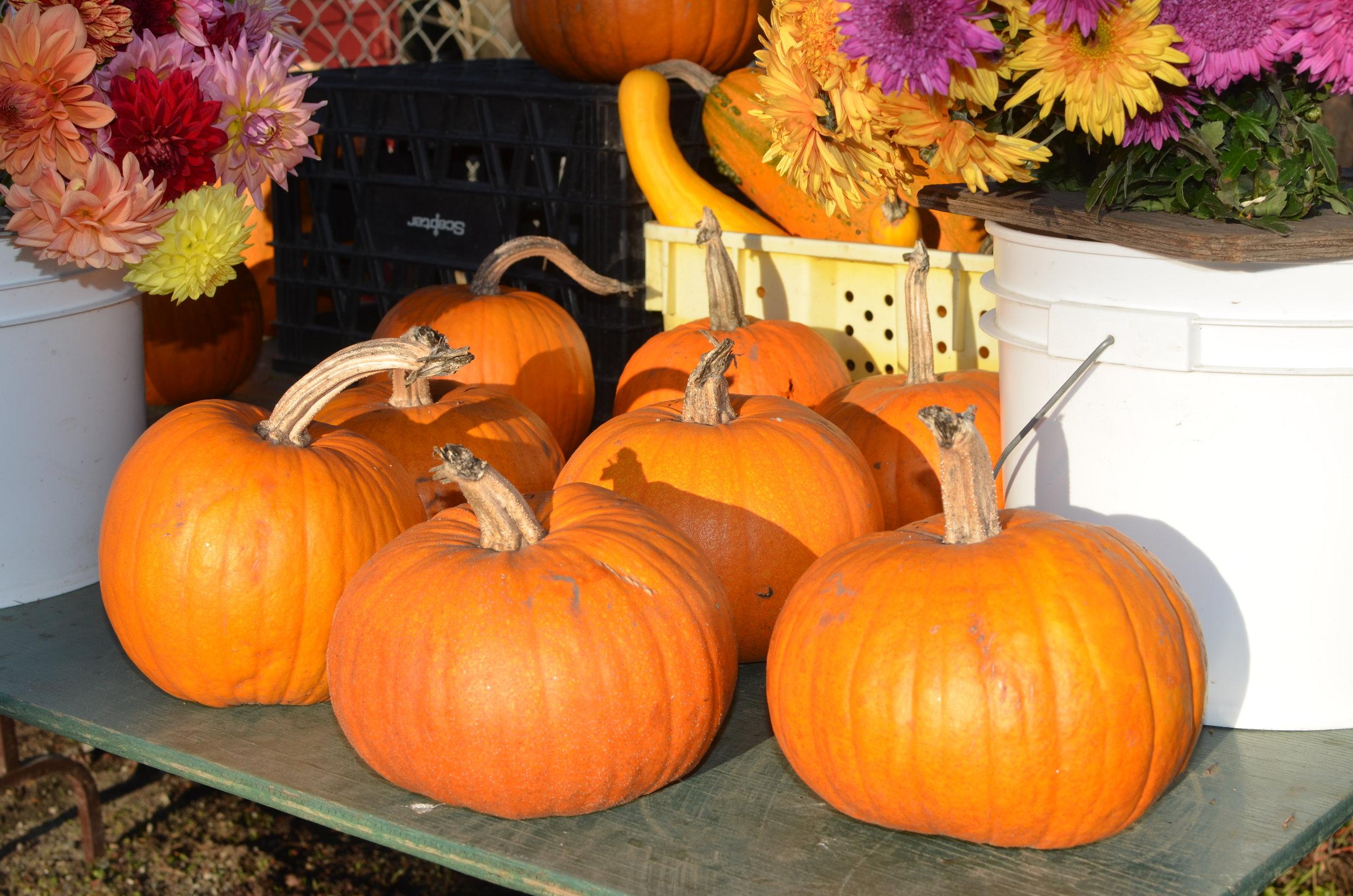 Sugar Pie Pumpkins2.jpg