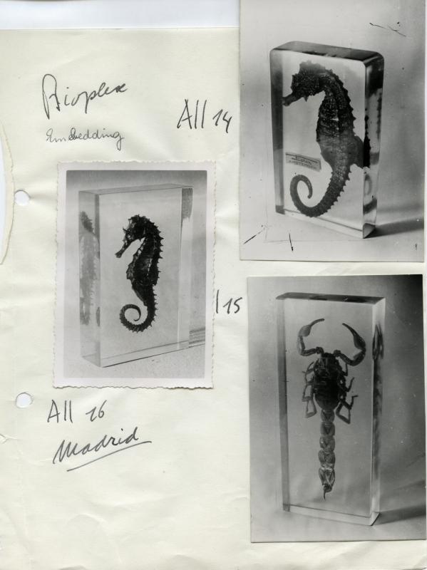 Zeepaardjes en een schorpioen in kunststof. Sea horses and a scorpion in plastic.