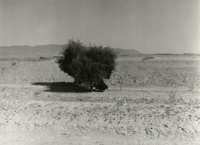Onderweg in Tunesië in 1953 komen ze een man tegen die takkenbossen op zijn rug draagt over een weg door de woestijn. On their way in Tunisia in 1953 Peter Pennarts and Jan Glissenaar meet a man carrying faggots on his back on a road in the dessert.