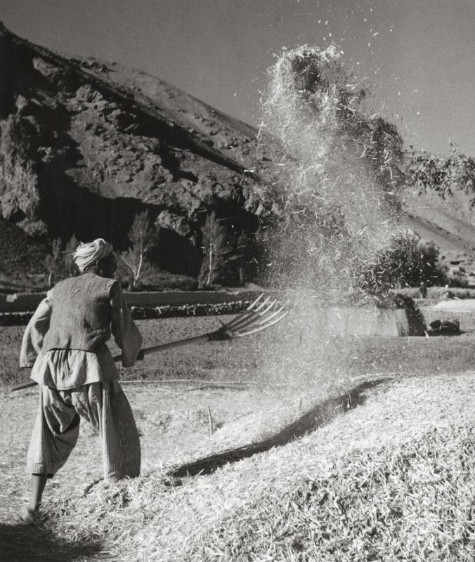 Afghaanse boer werpt met een riek graan omhoog. Afghanistan, 1954. Afghan farmer lifting grain with a fork. Afghanistan, 1954.