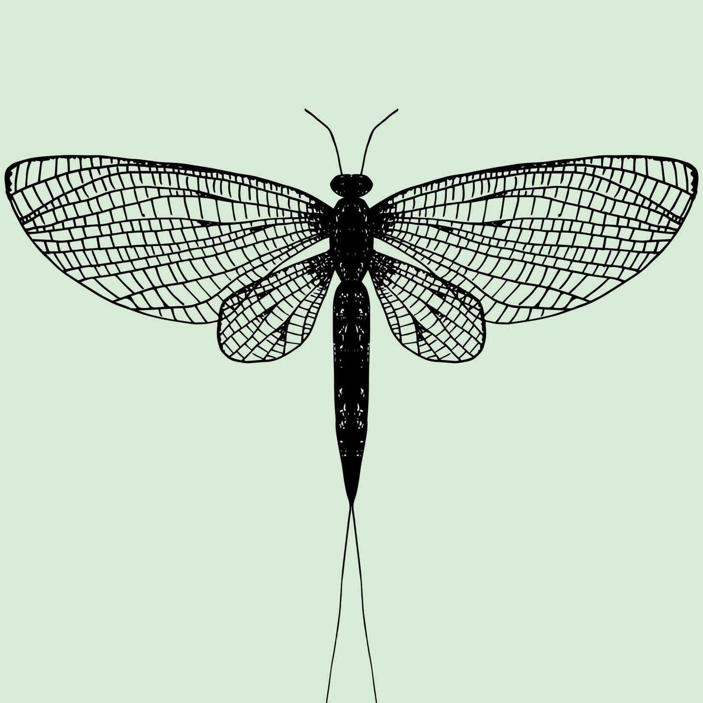 mayfly-green.jpg