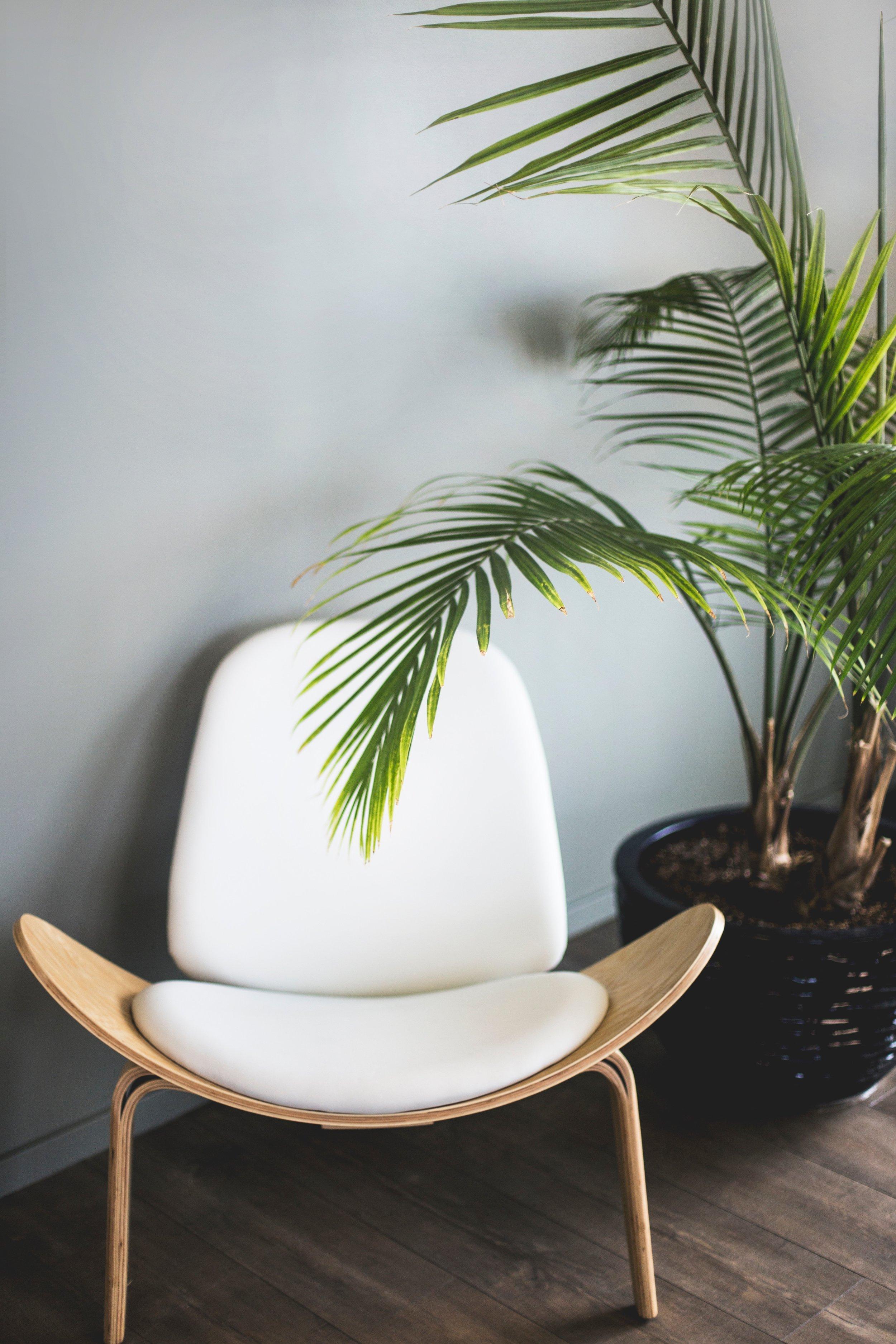 office plants 1.jpg