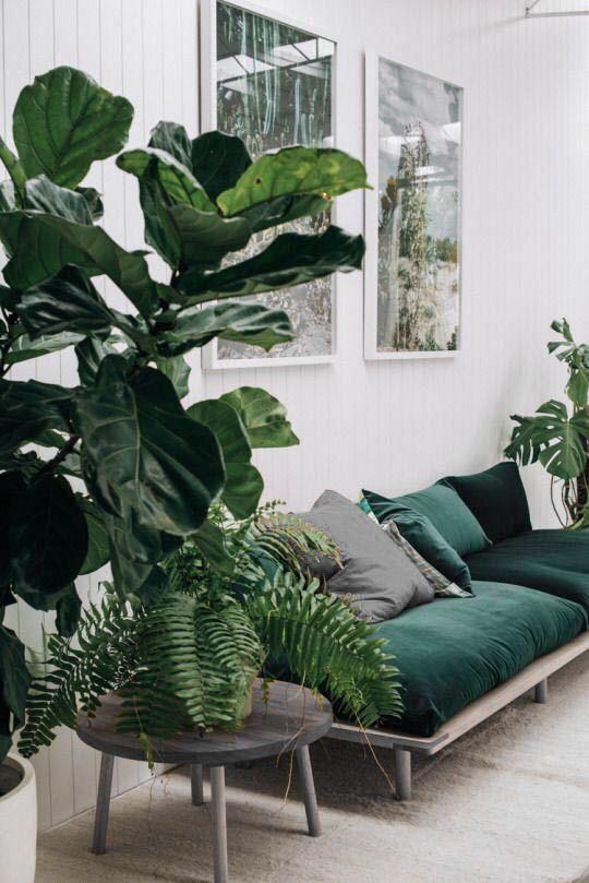 Office plants 2.jpg