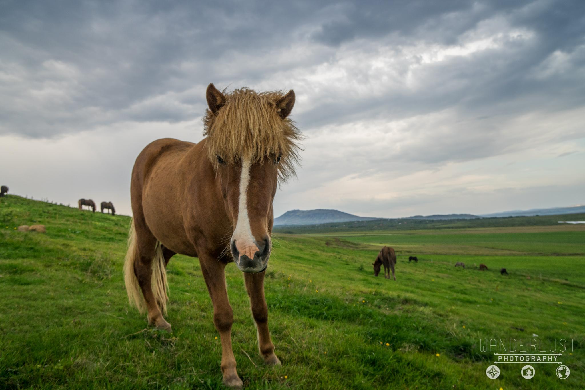 Iceland-06612.jpg