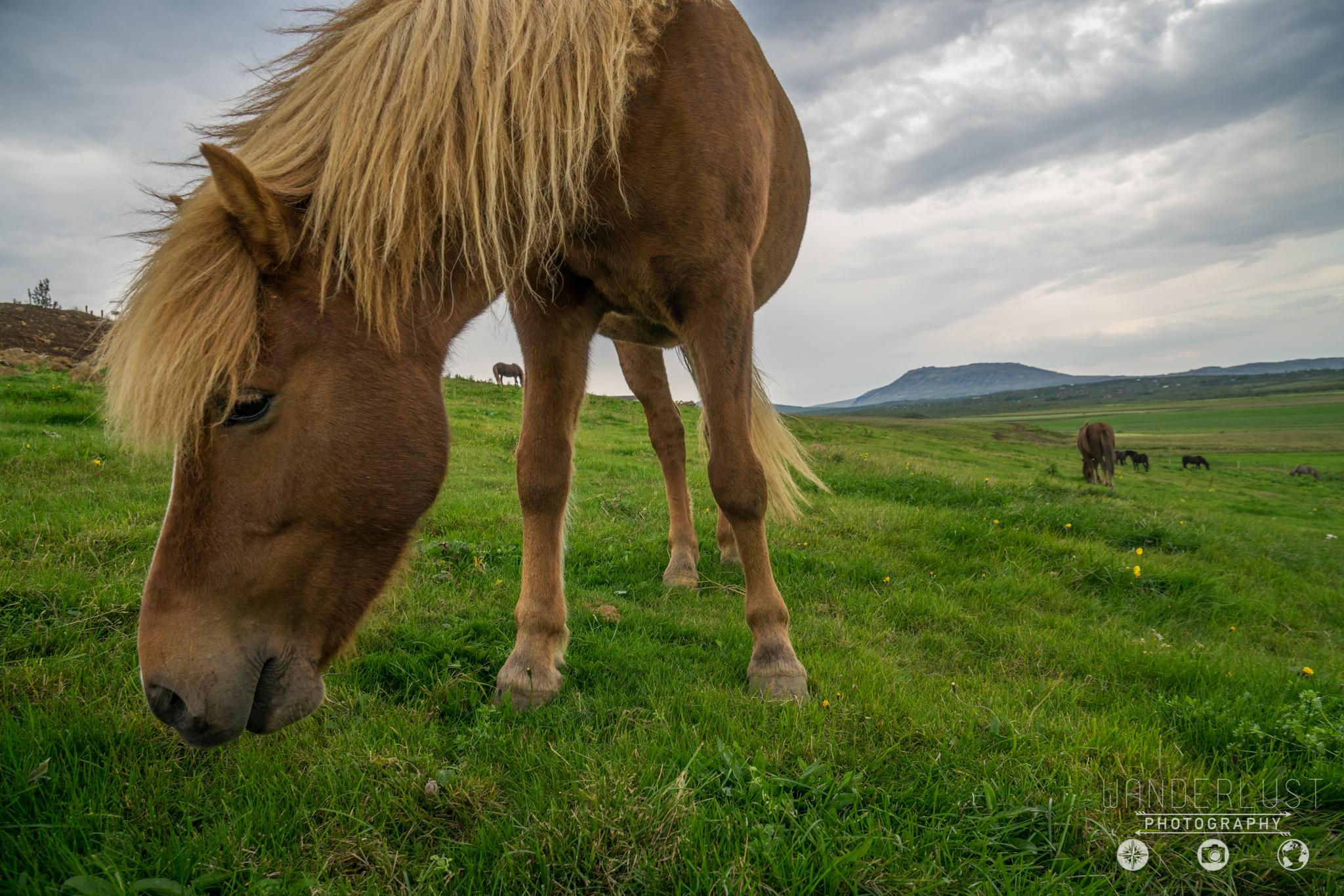 Iceland-06616.jpg