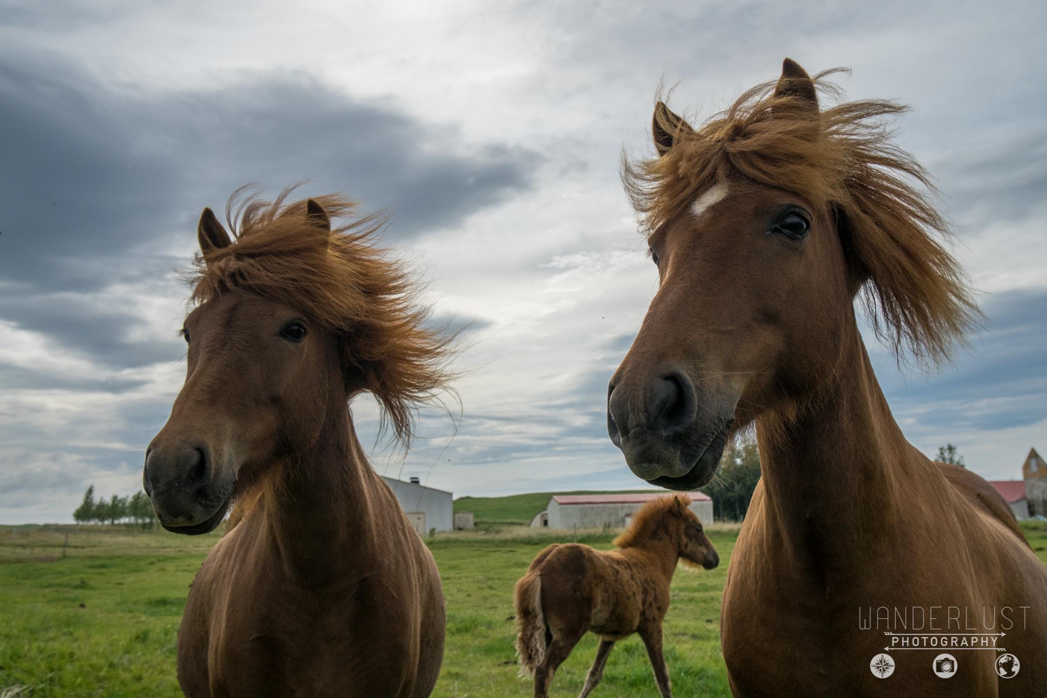 Iceland-06836.jpg