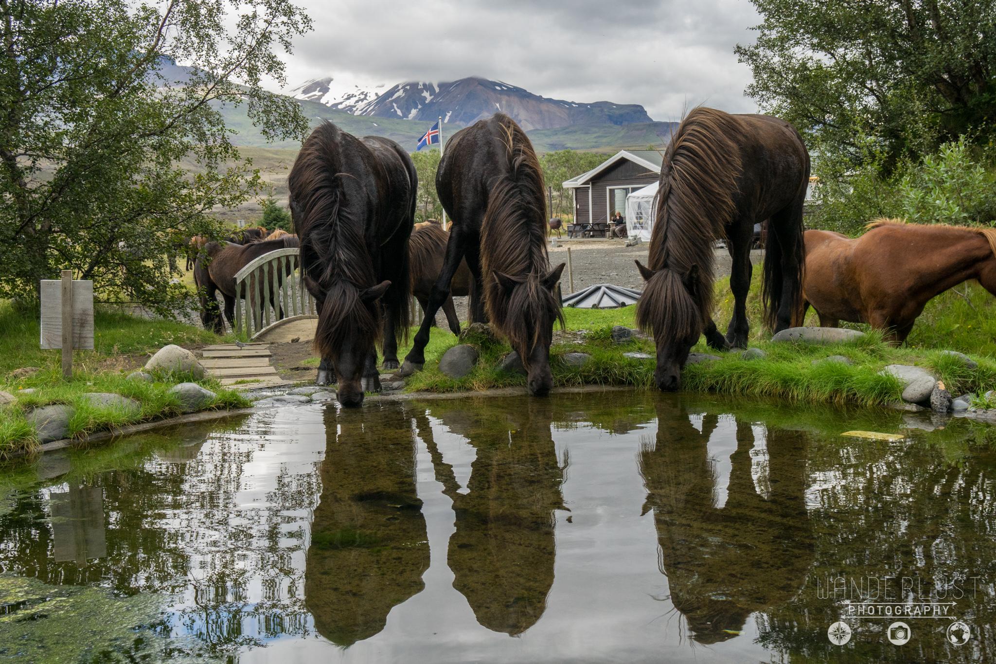 Iceland-06952.jpg