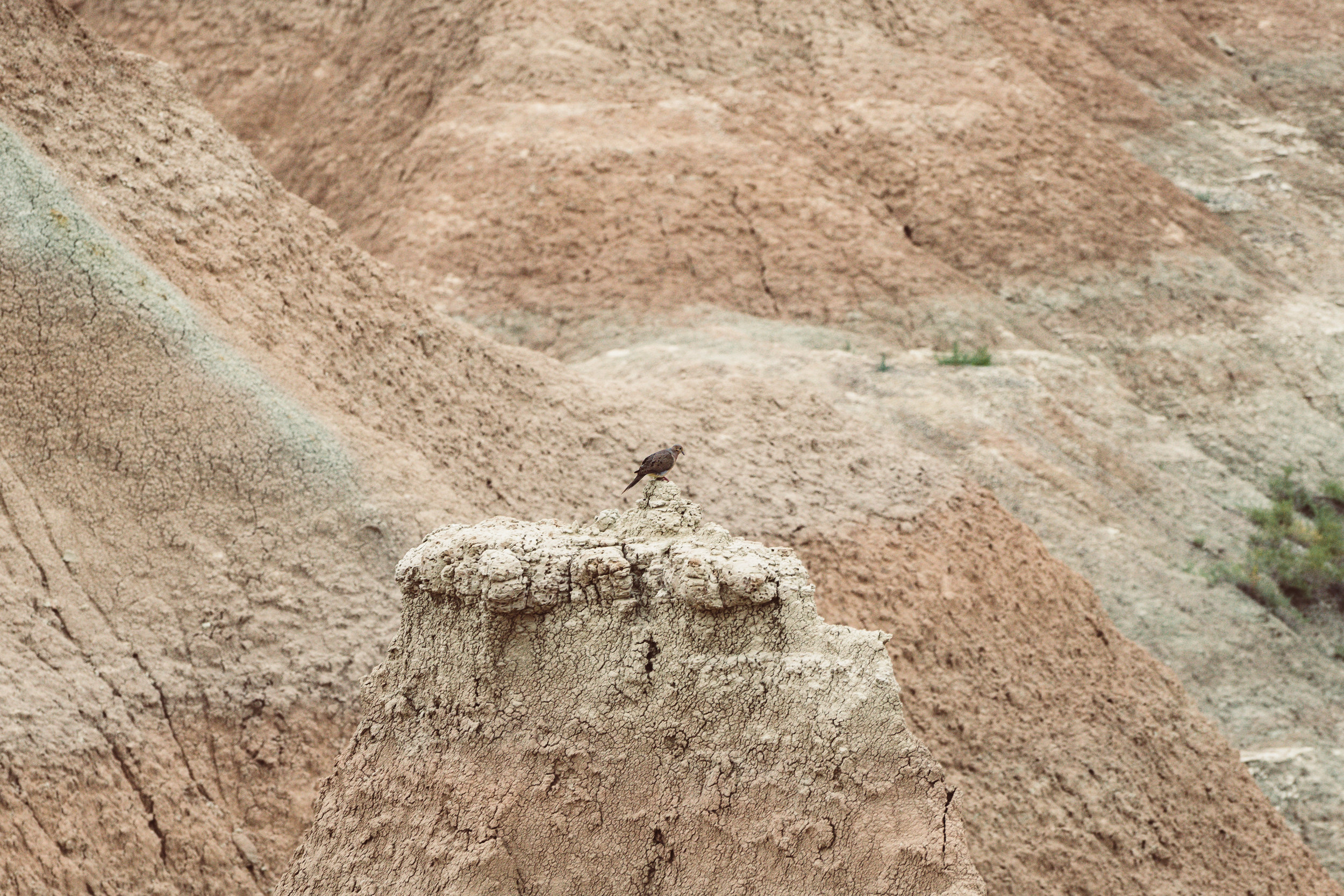 Badlands-04837.jpg