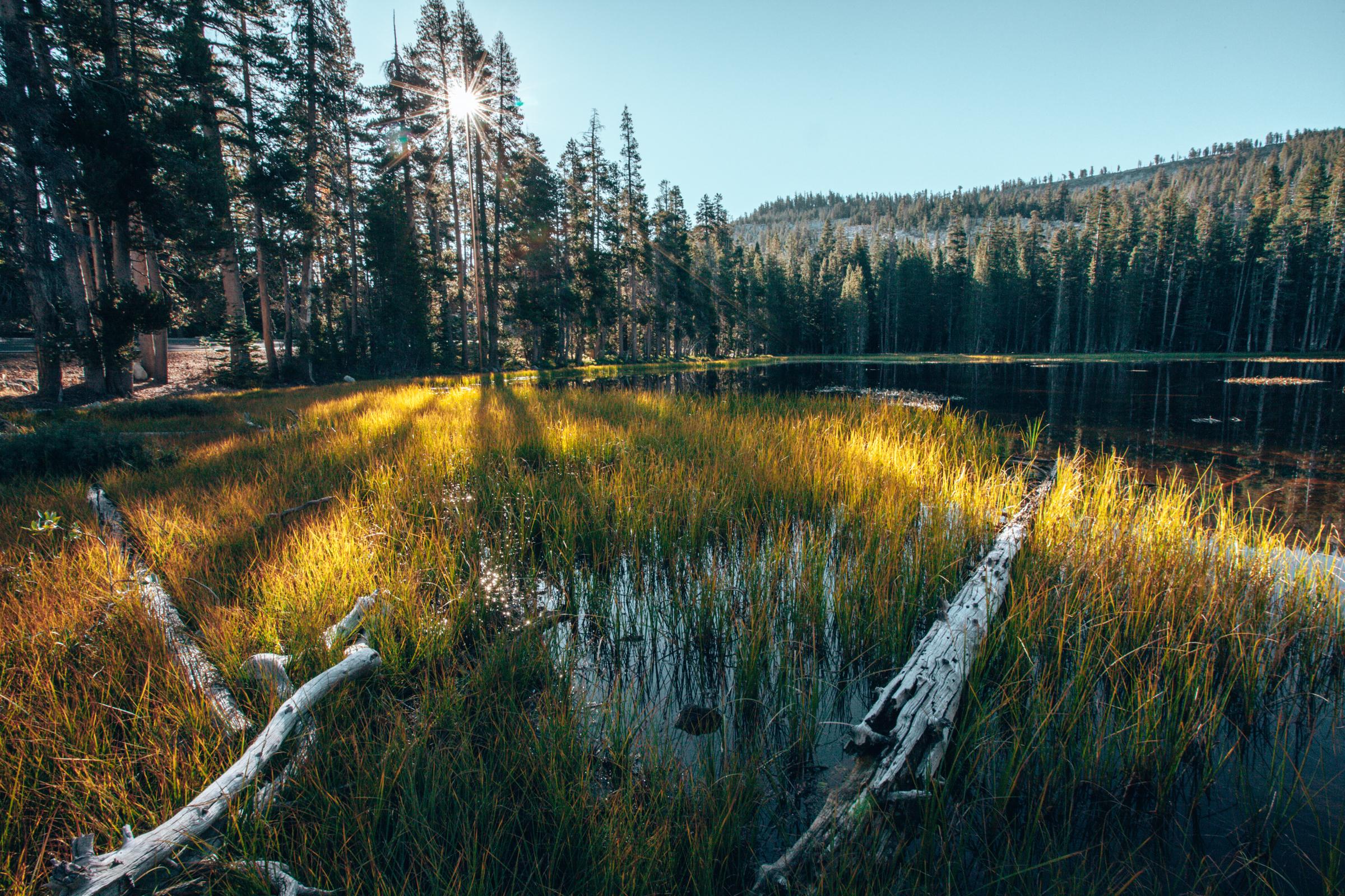 Siesta Lake-0117.jpg