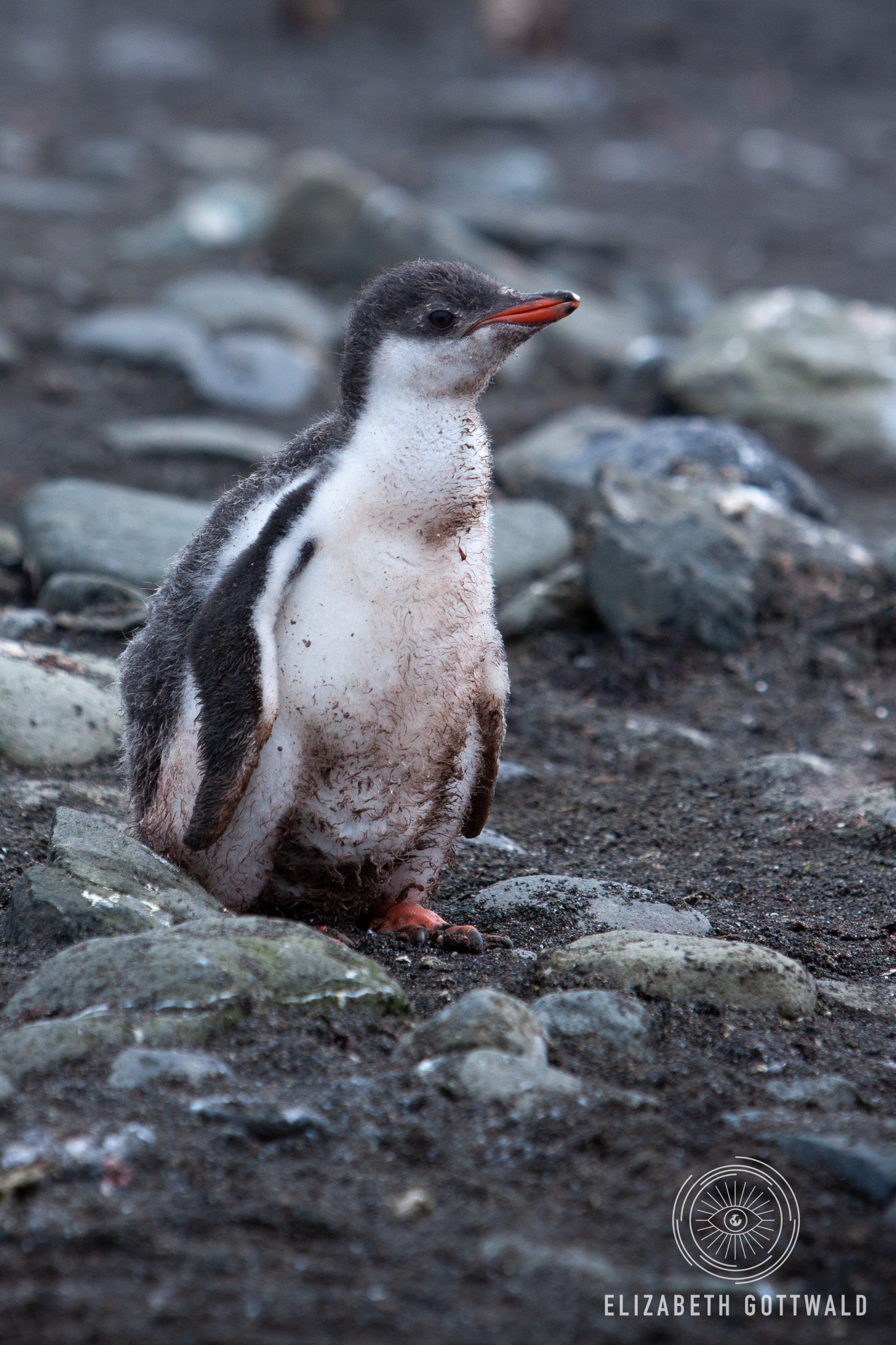 Antarctica-4688.jpg