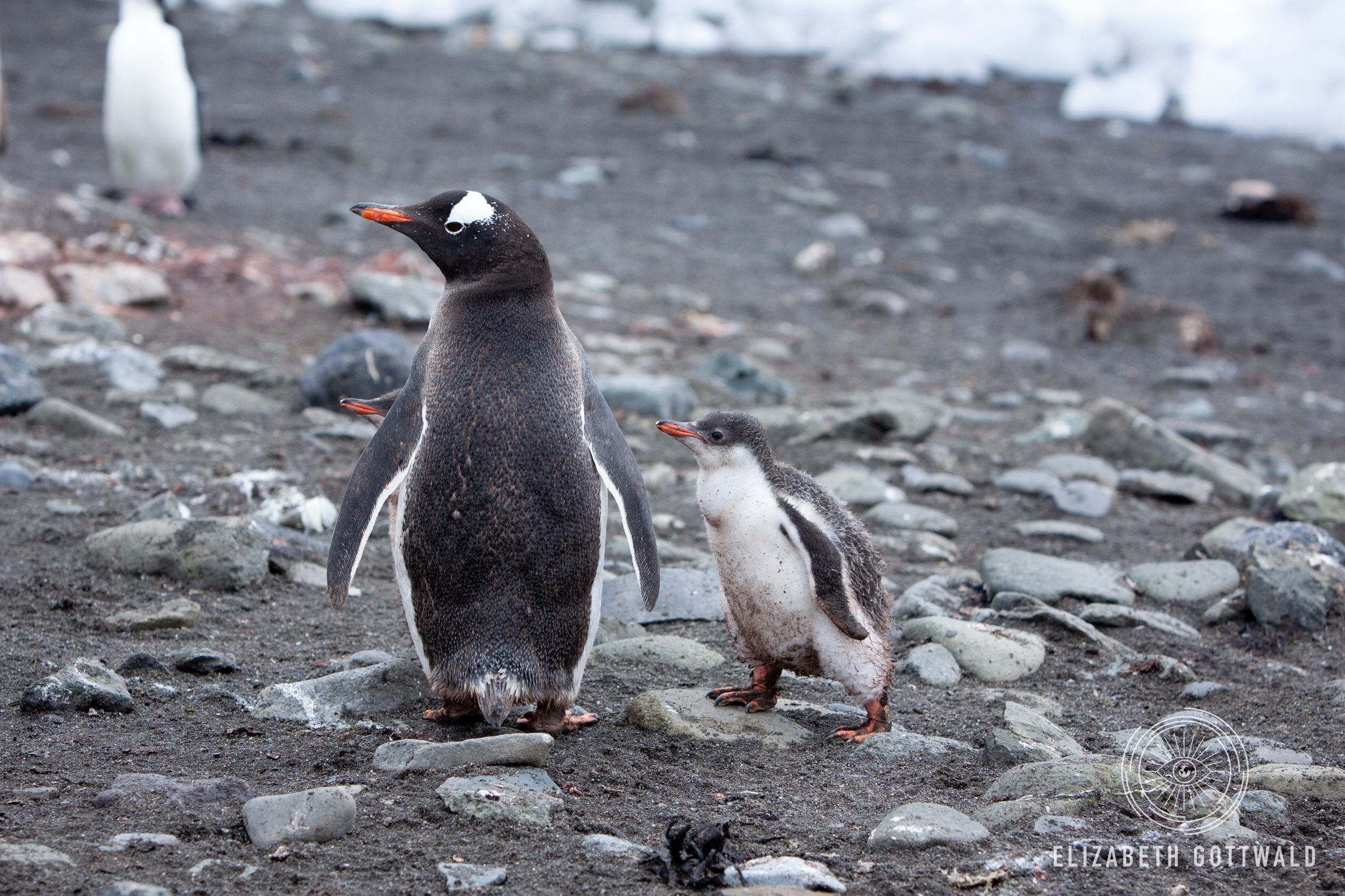 Antarctica-4699.jpg
