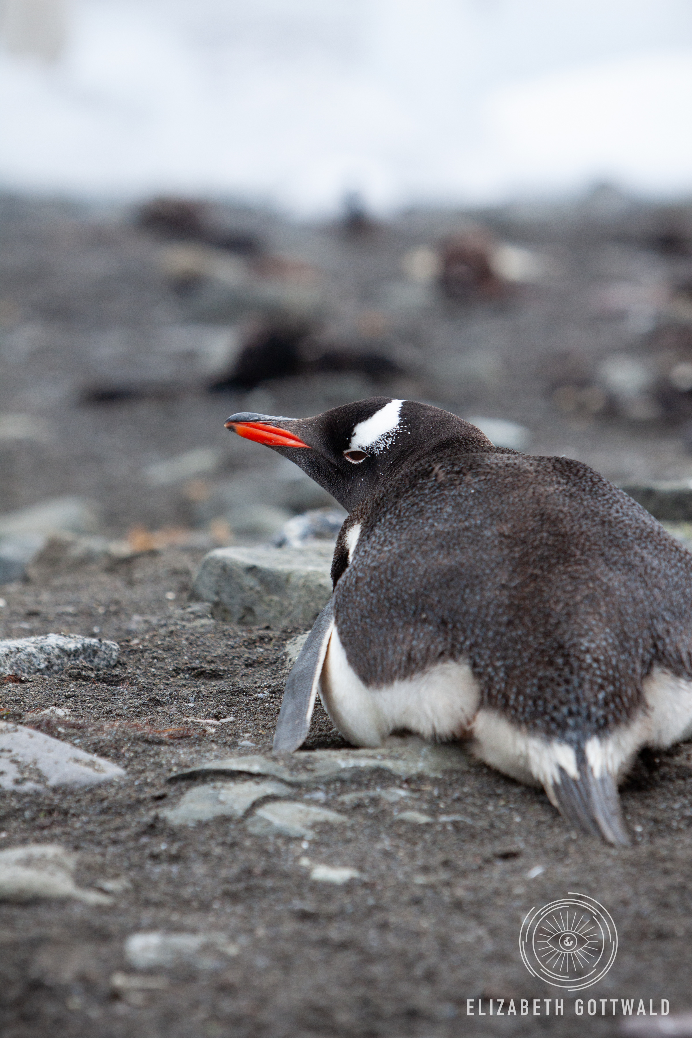 Antarctica-4705.jpg