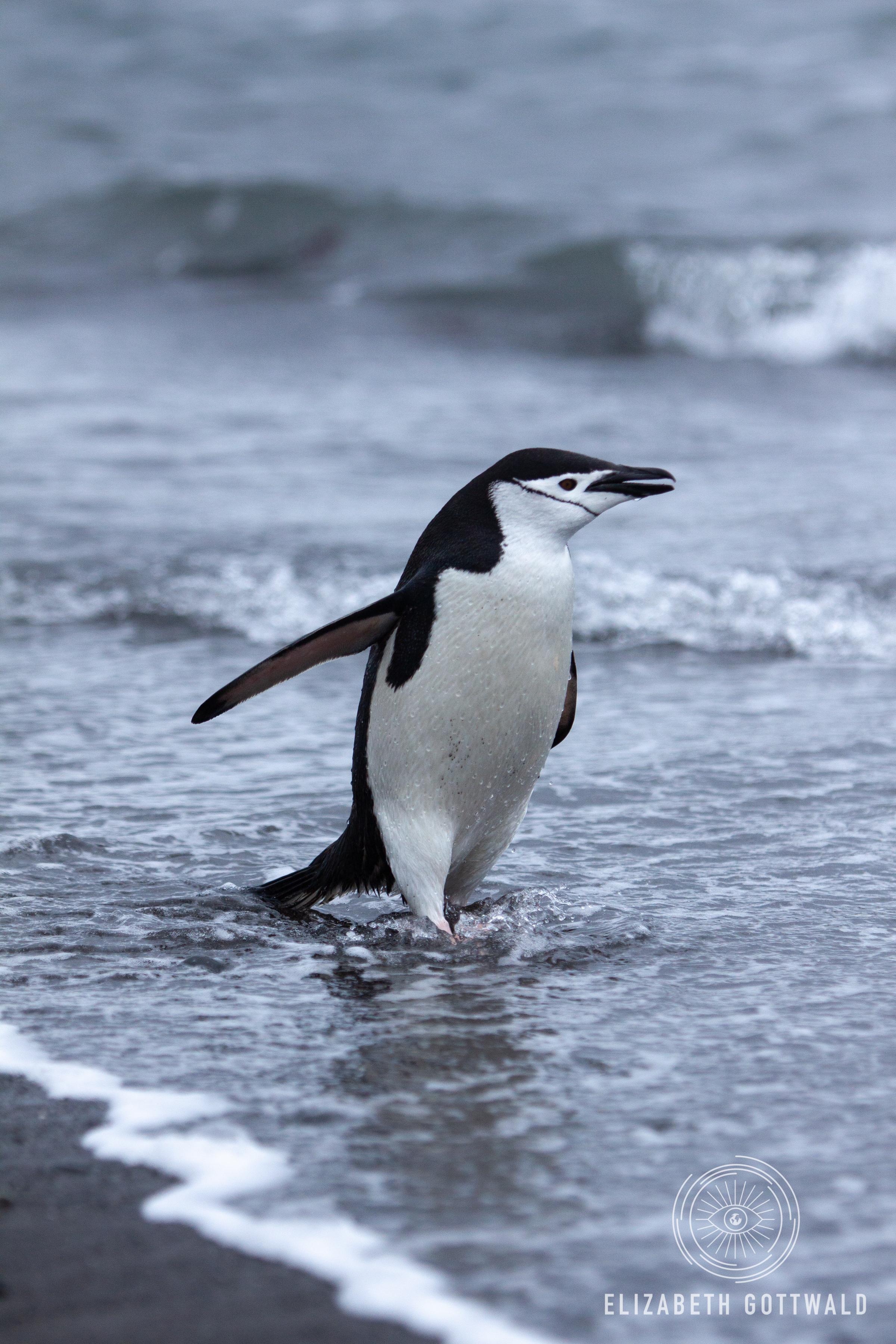 Antarctica-4710.jpg