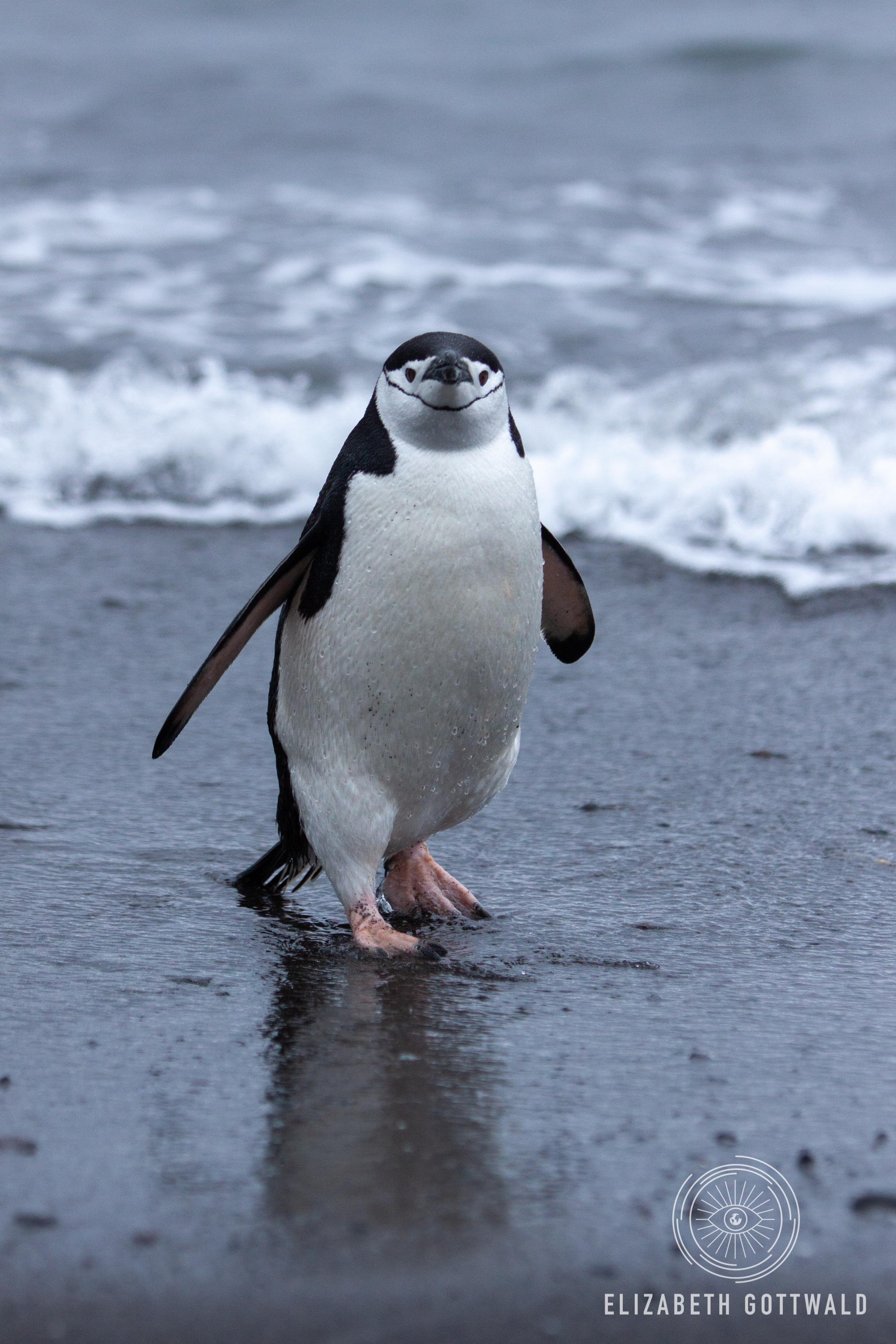 Antarctica-4713.jpg