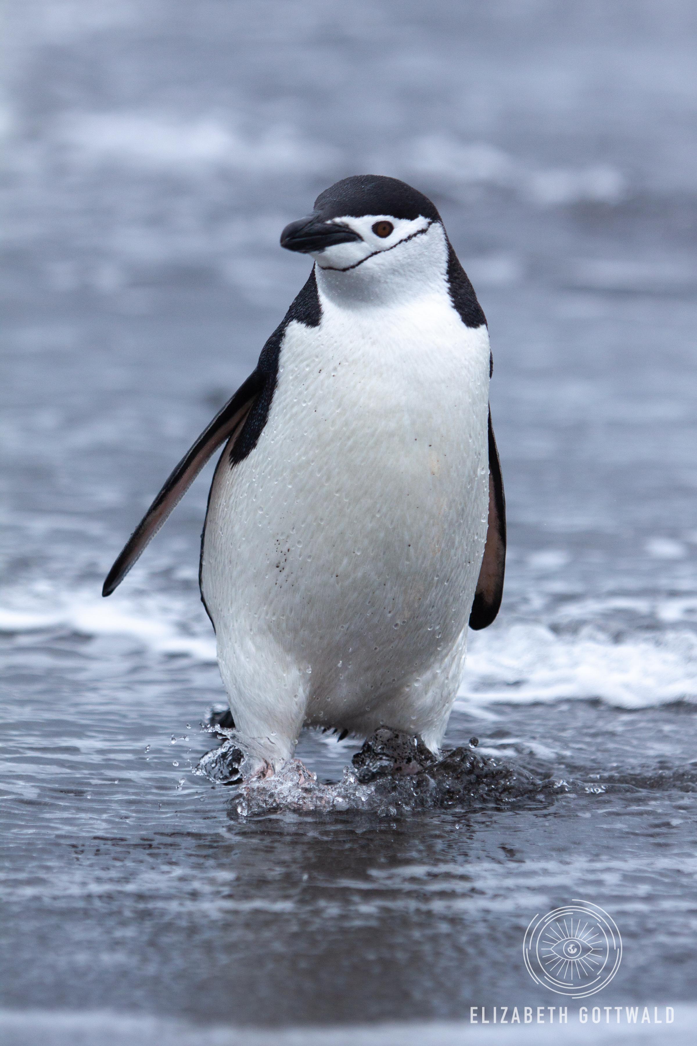 Antarctica-4716.jpg
