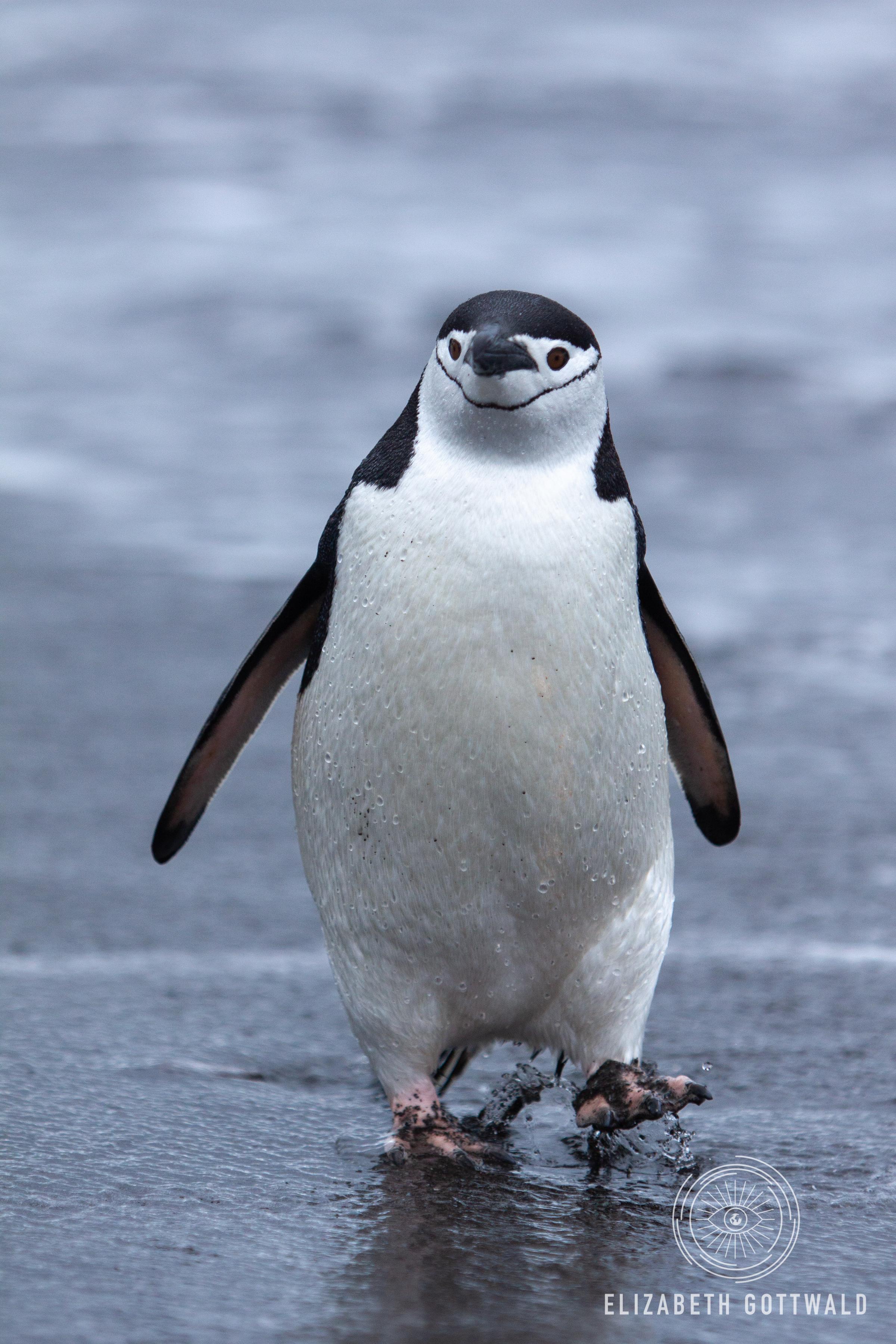 Antarctica-4717.jpg