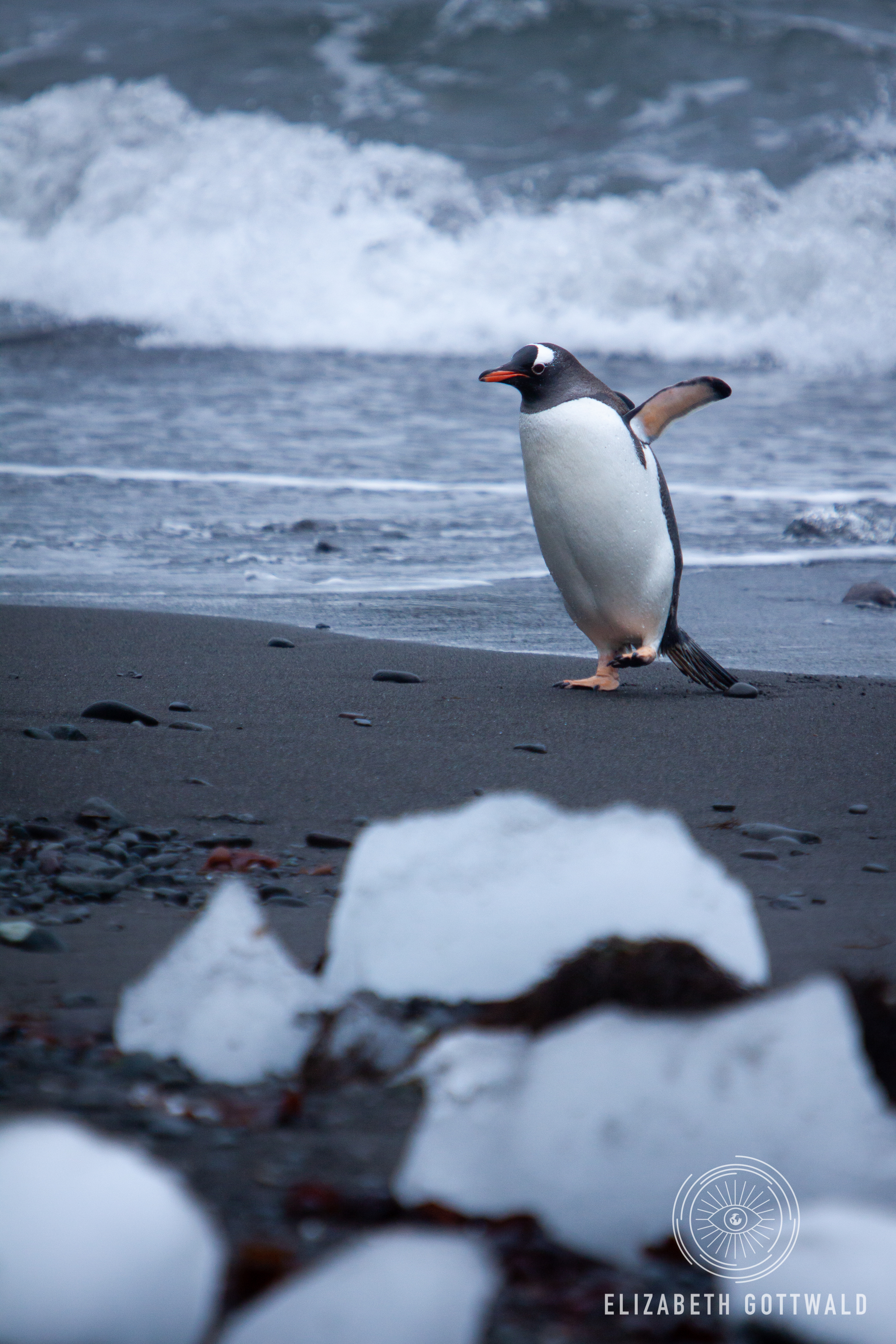Antarctica-4788.jpg