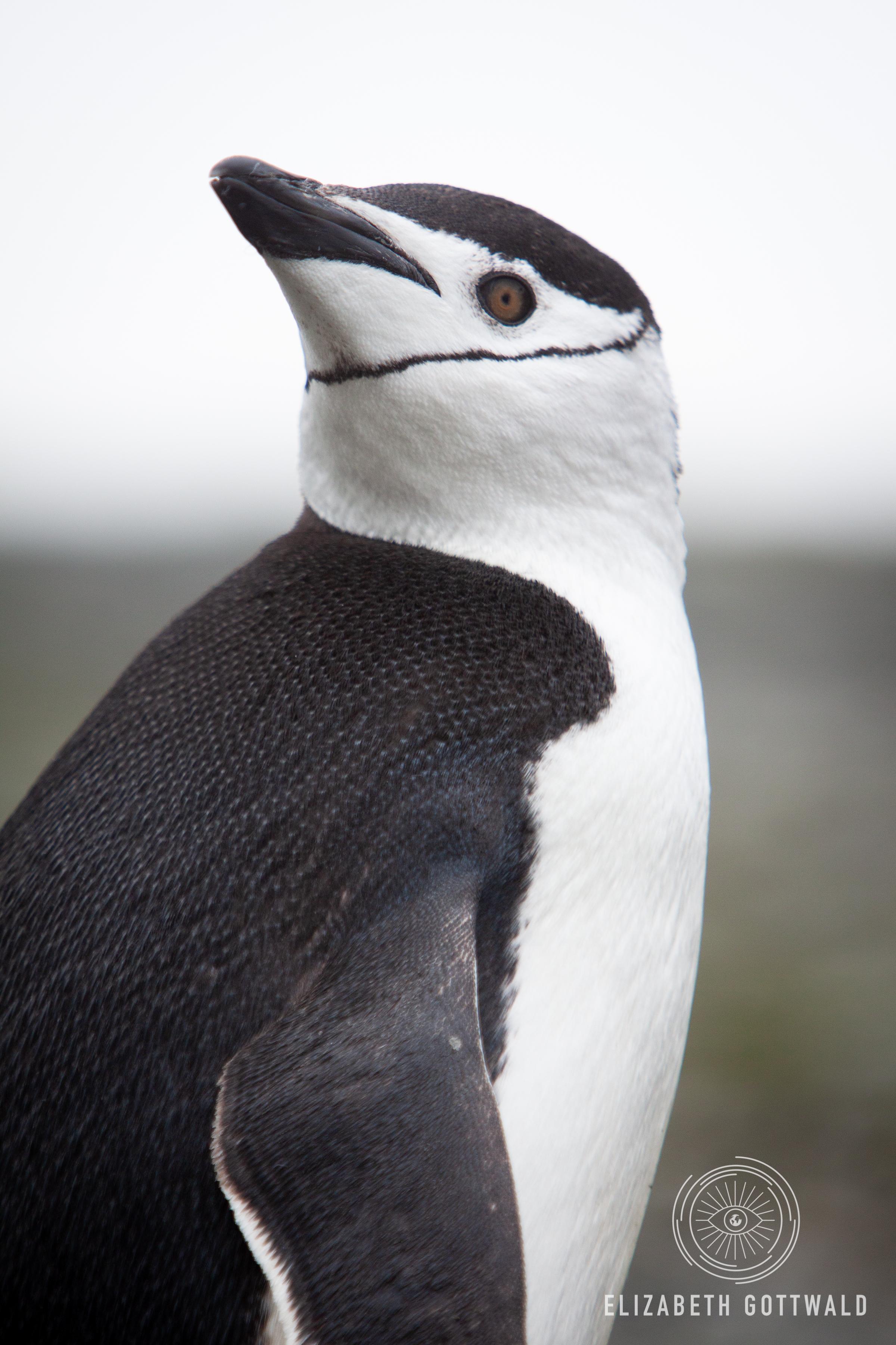 Antarctica-4767.jpg