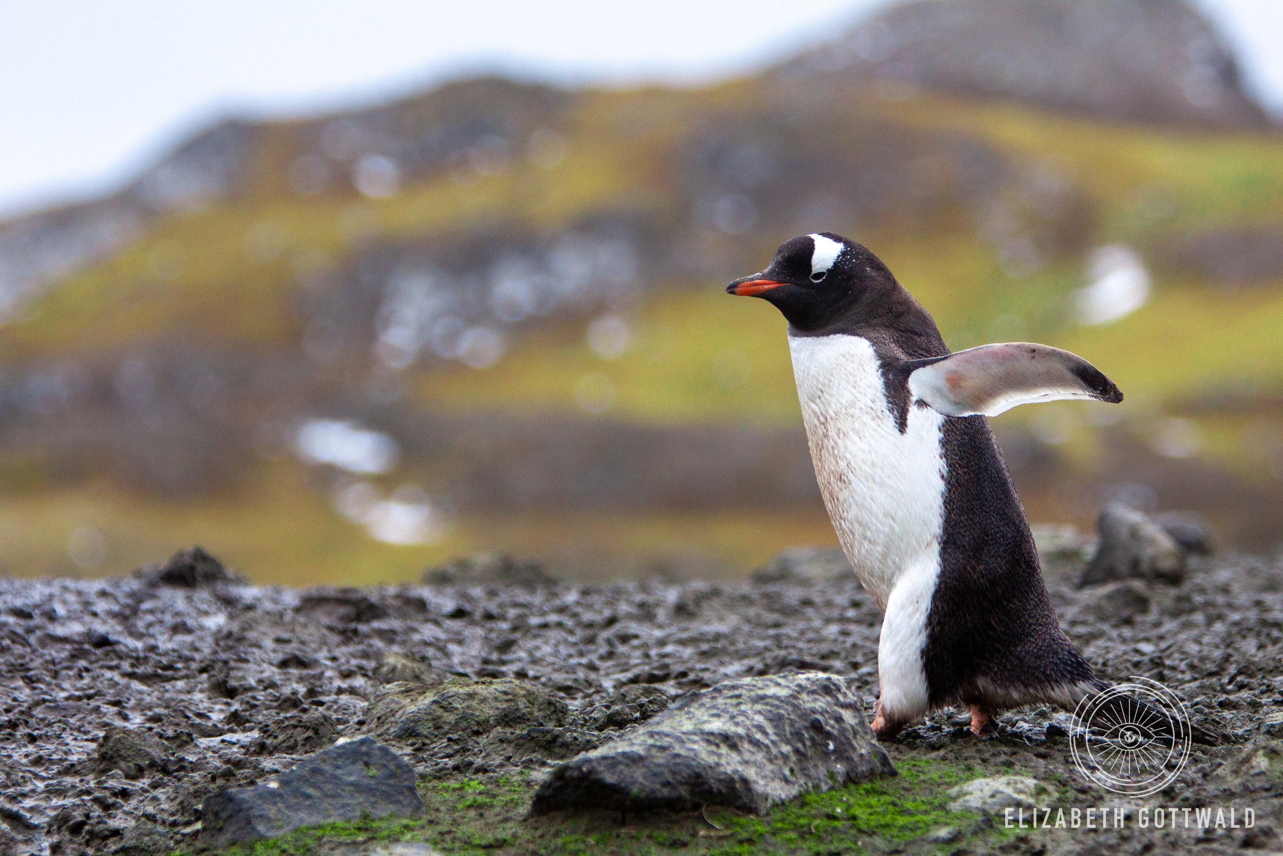 Antarctica-4798.jpg