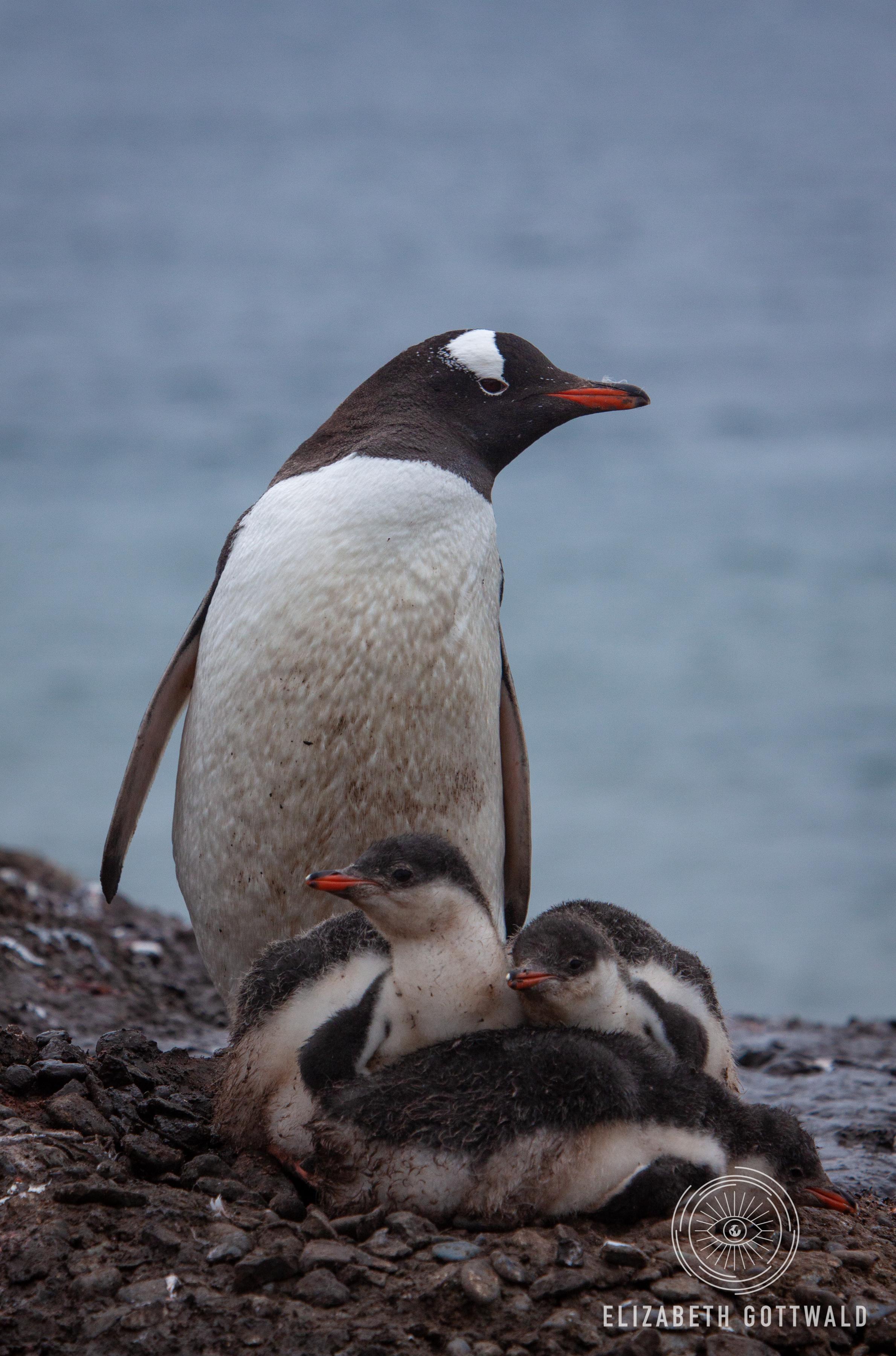 Antarctica-4804.jpg