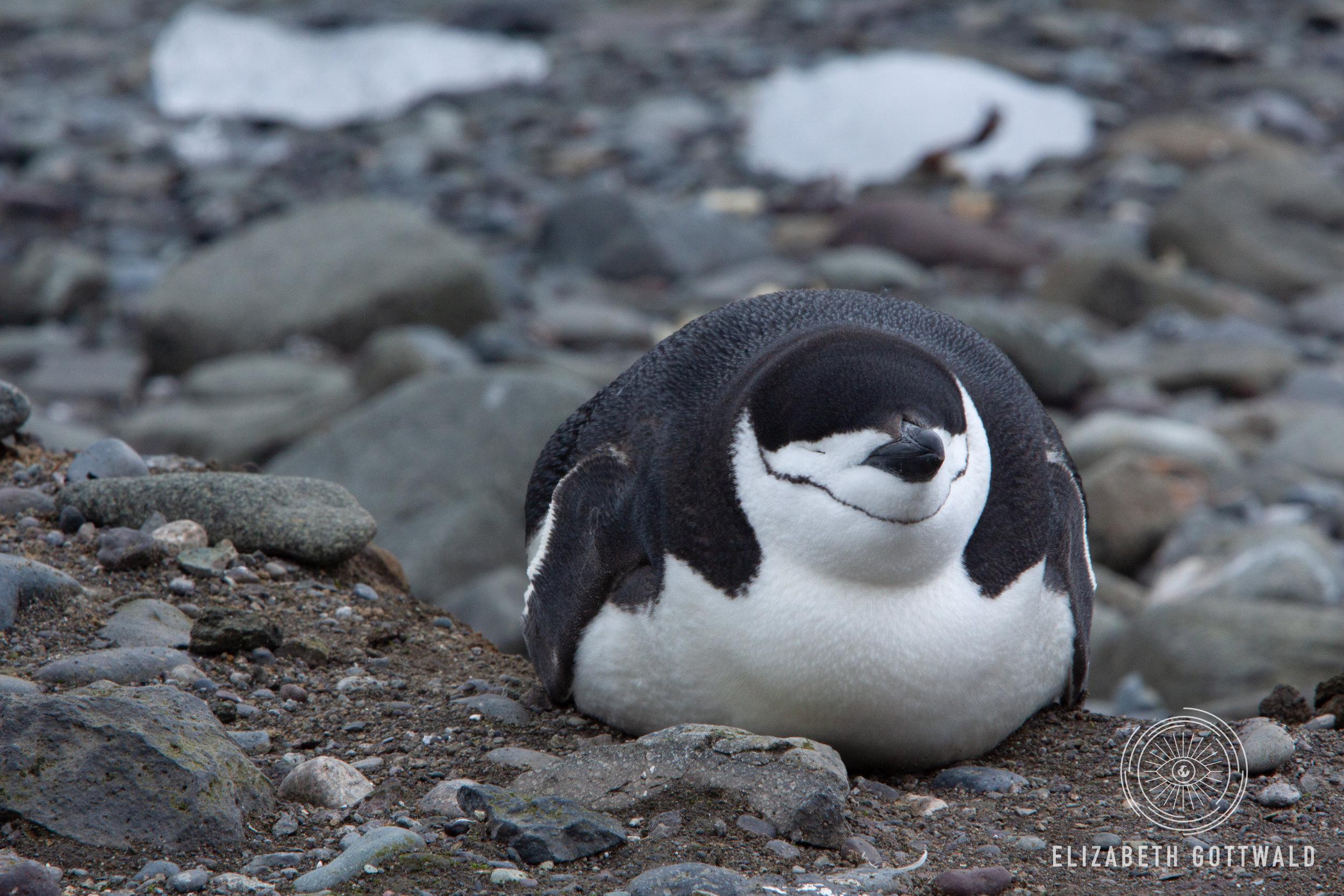 Antarctica-4838.jpg