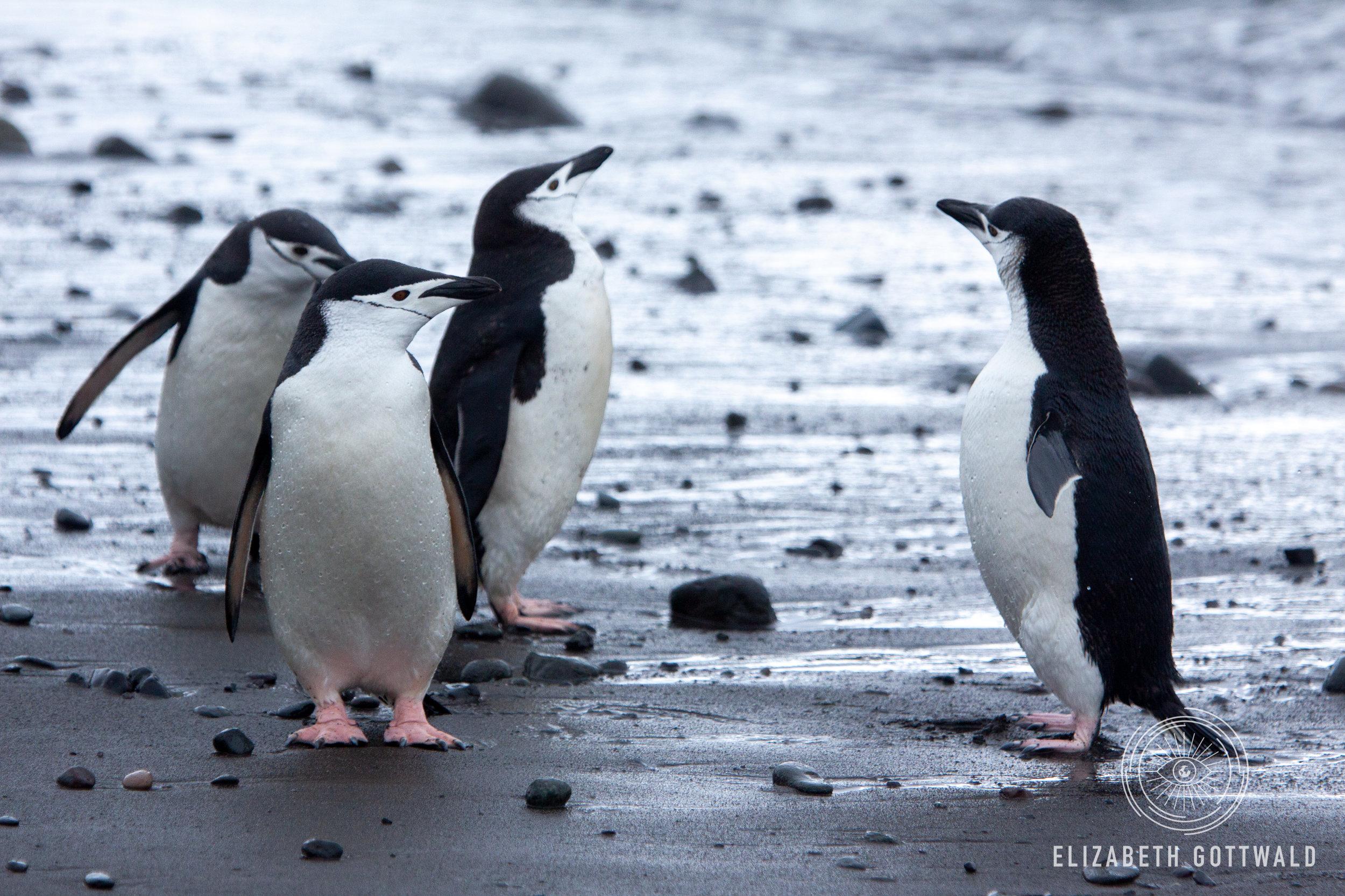 Antarctica-4861.jpg