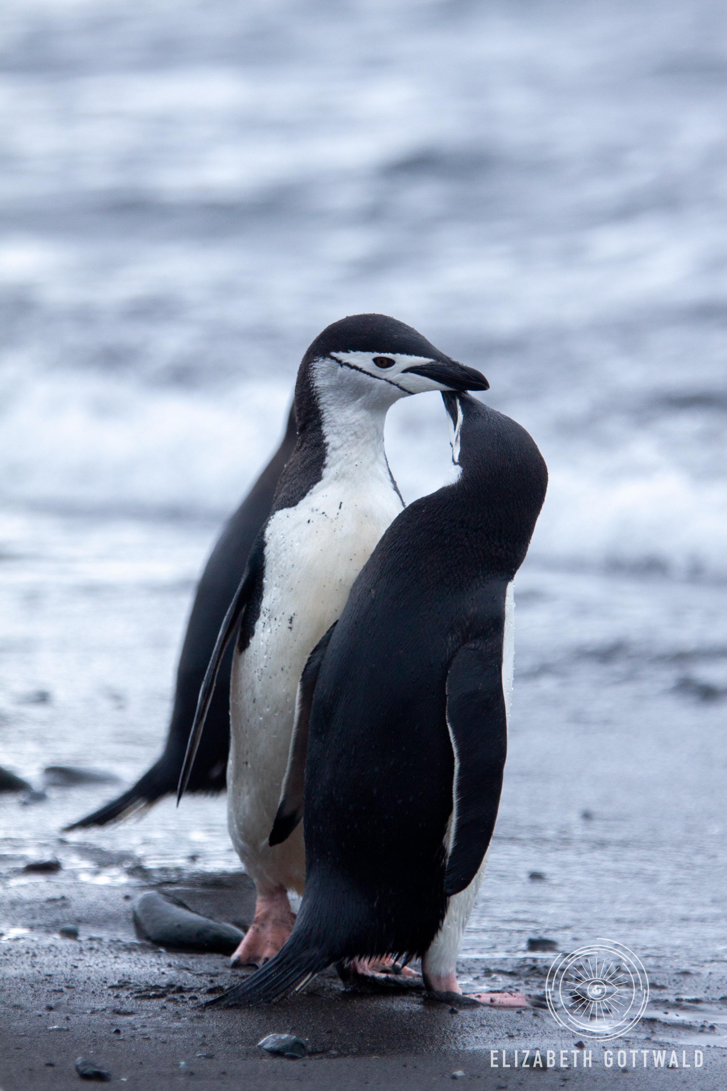 Antarctica-4869.jpg