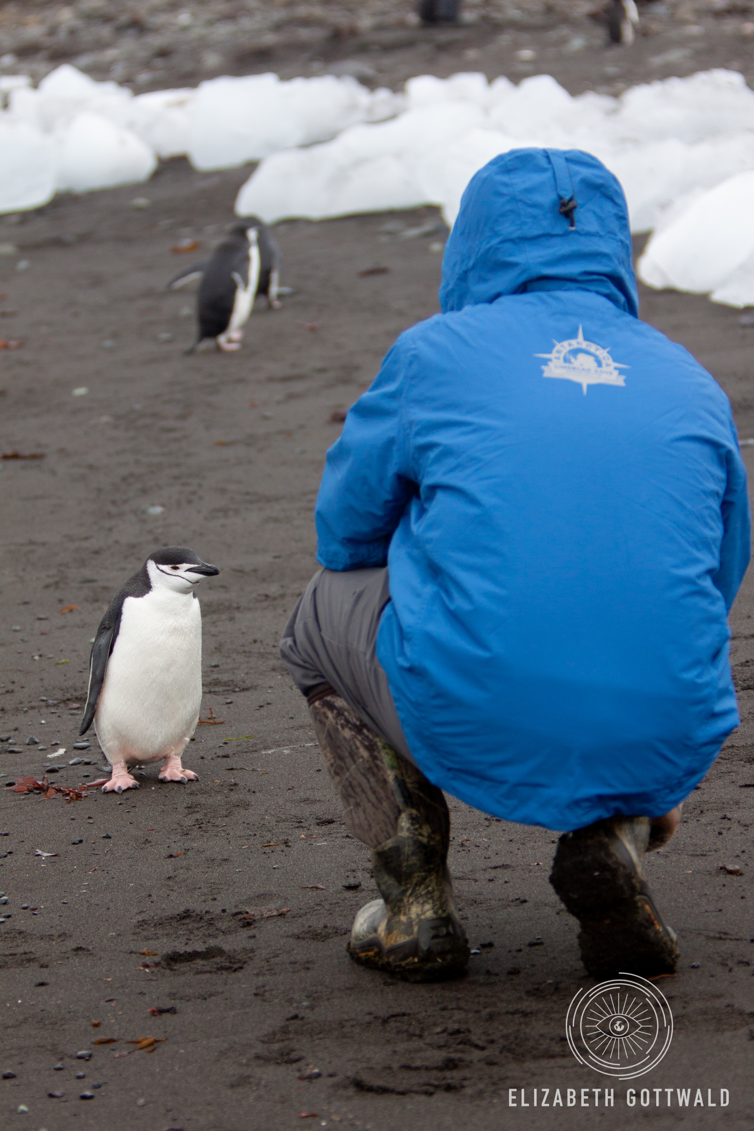 Antarctica-4891.jpg