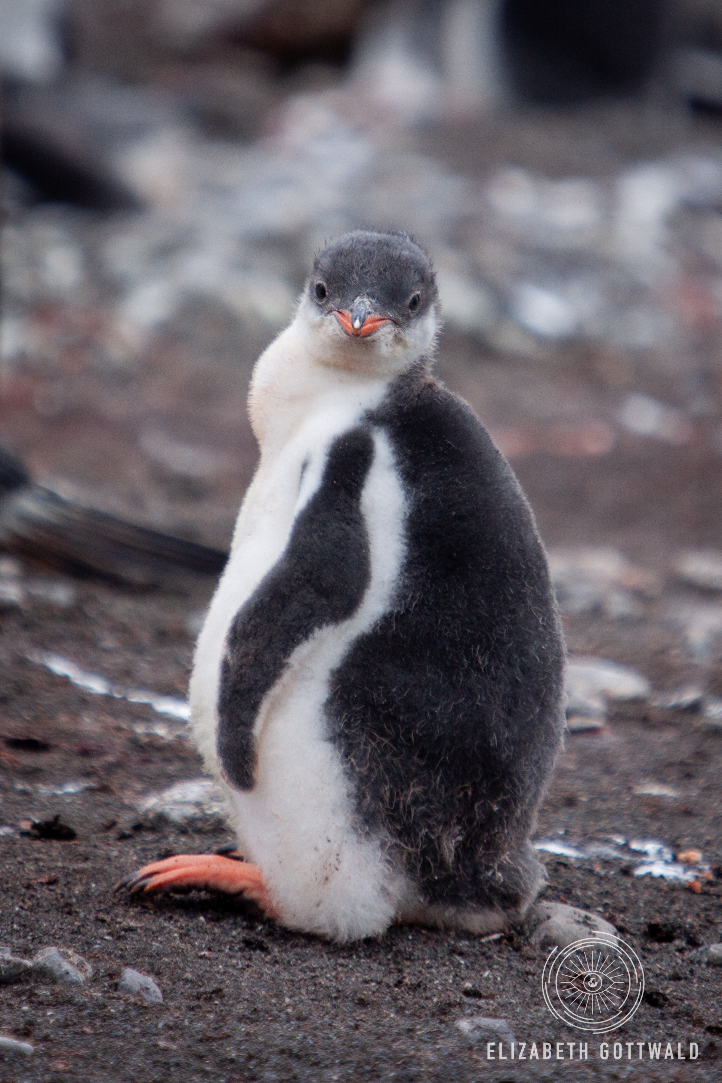 Antarctica-4892.jpg