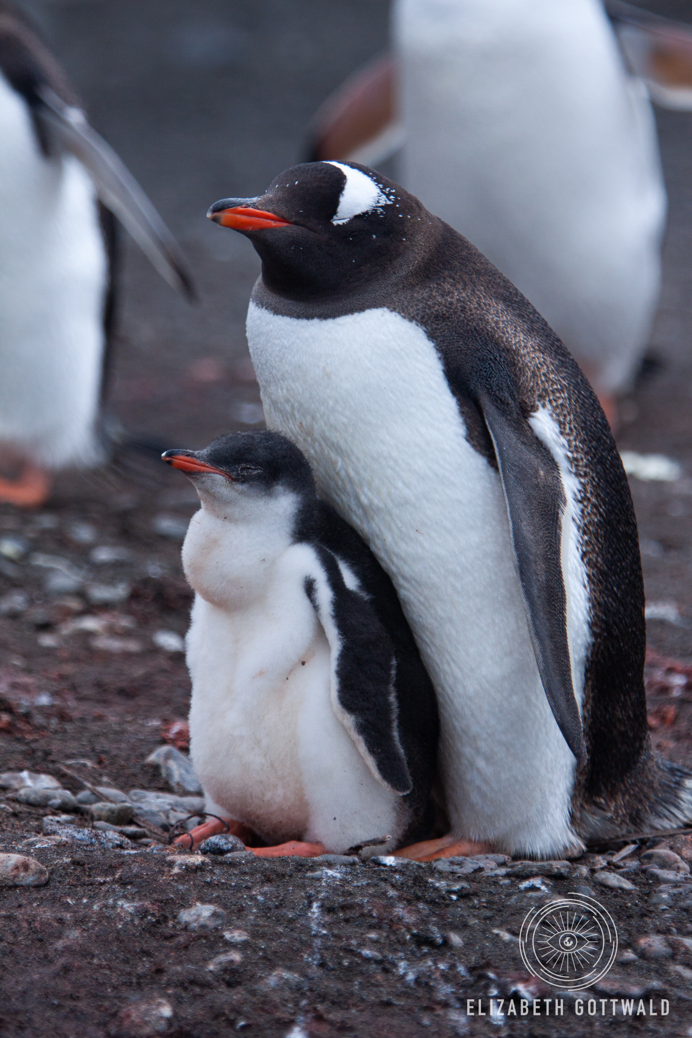 Antarctica-4897.jpg