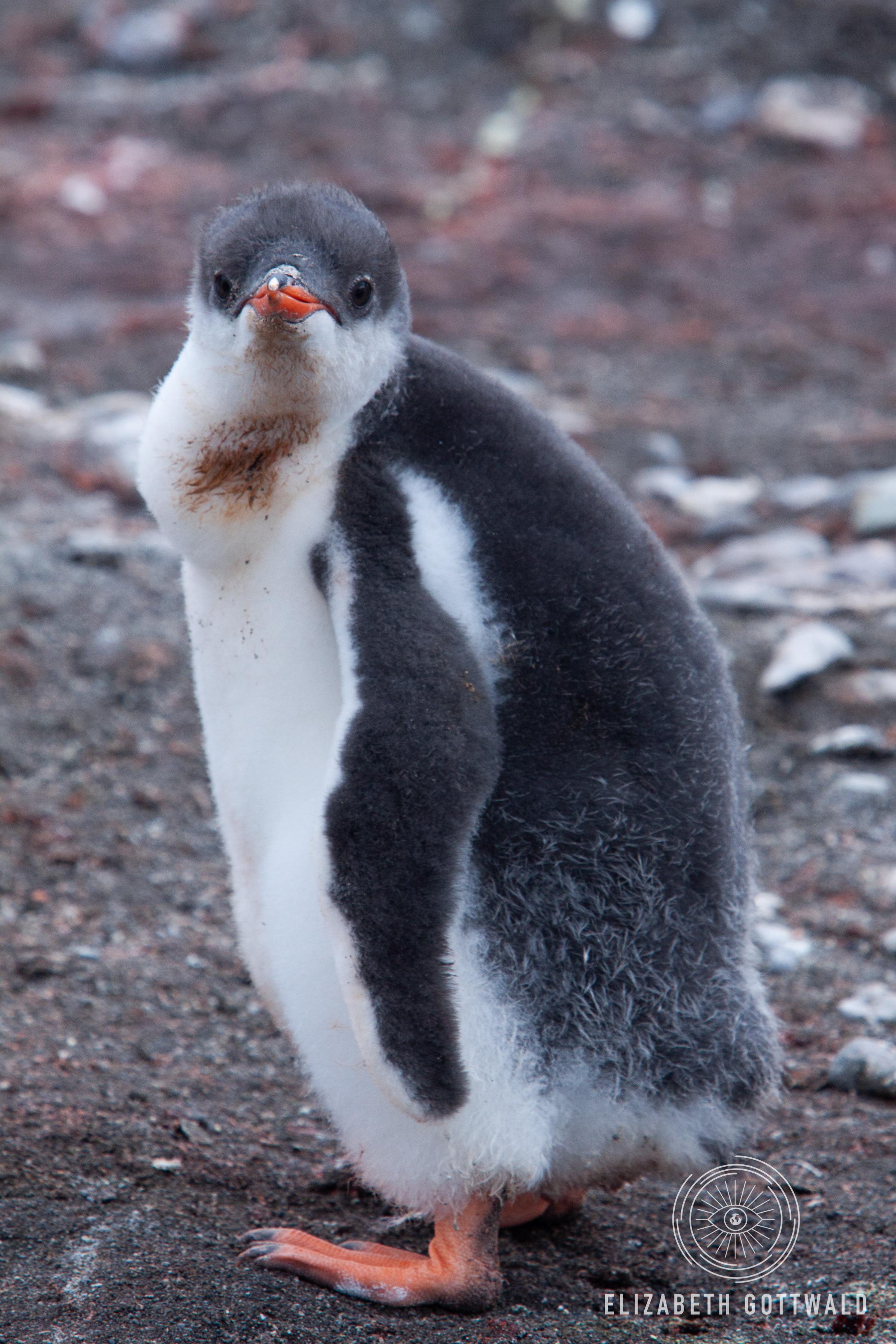 Antarctica-4912.jpg