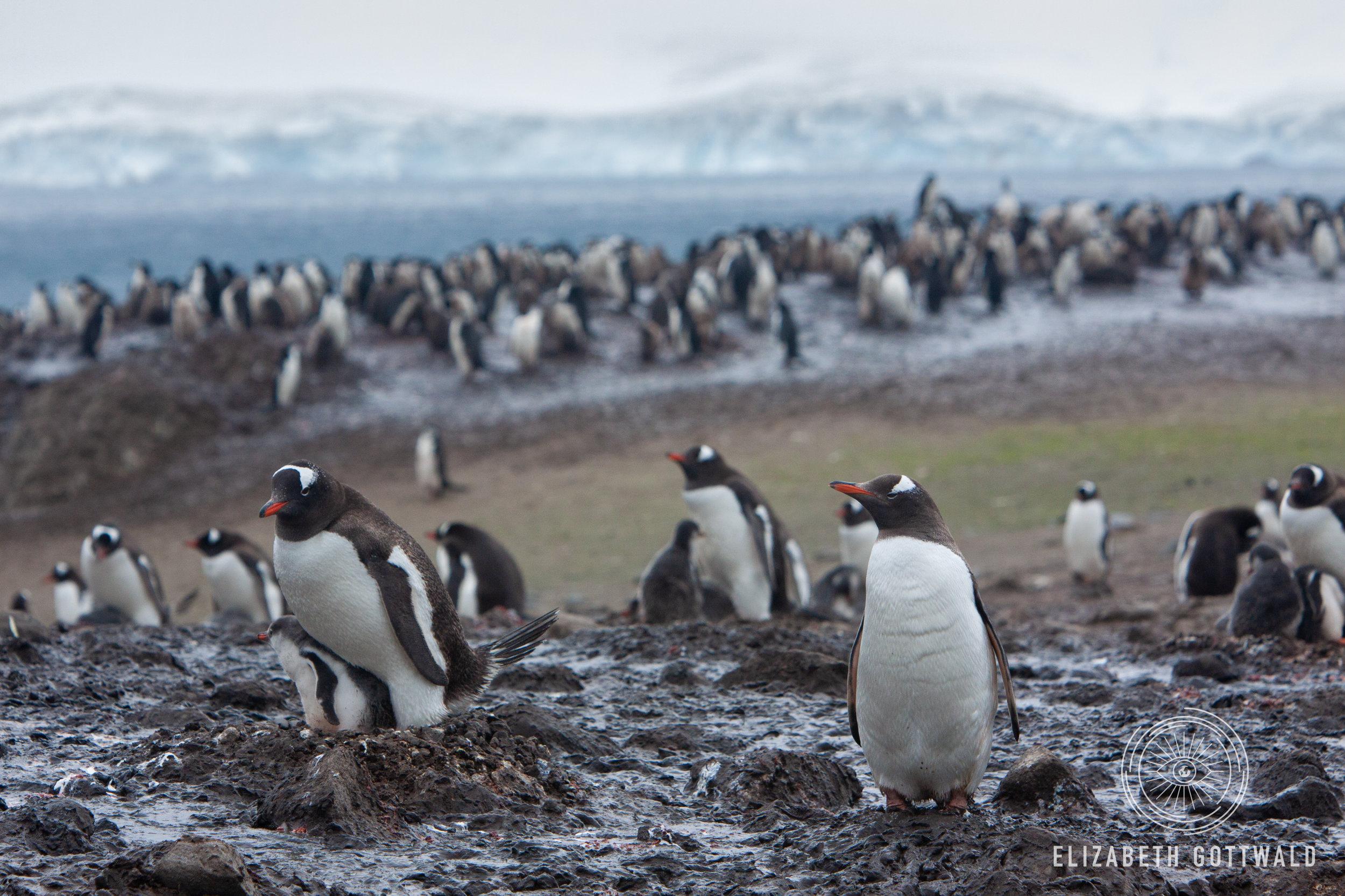 Antarctica-4927.jpg