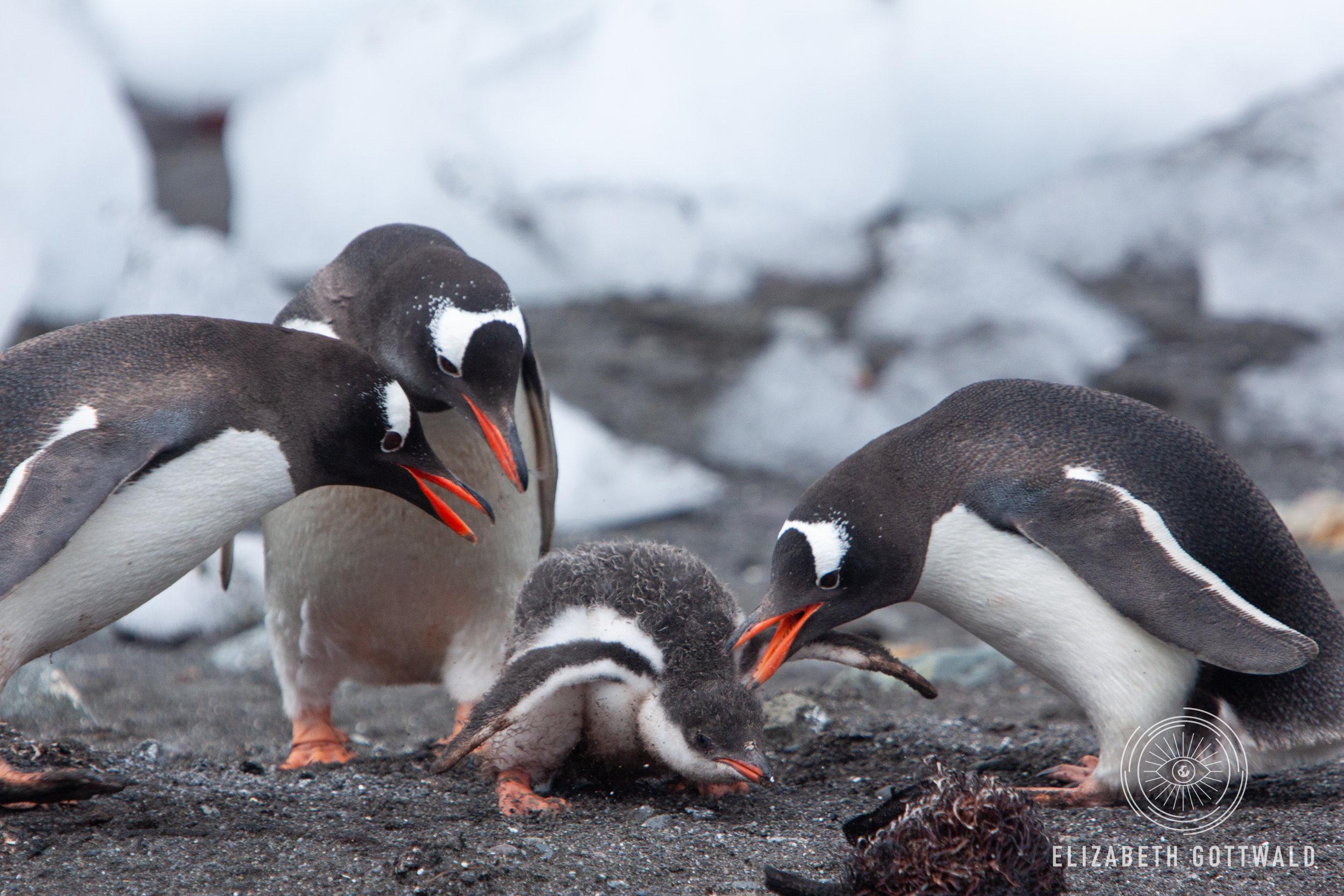 Antarctica-4941.jpg