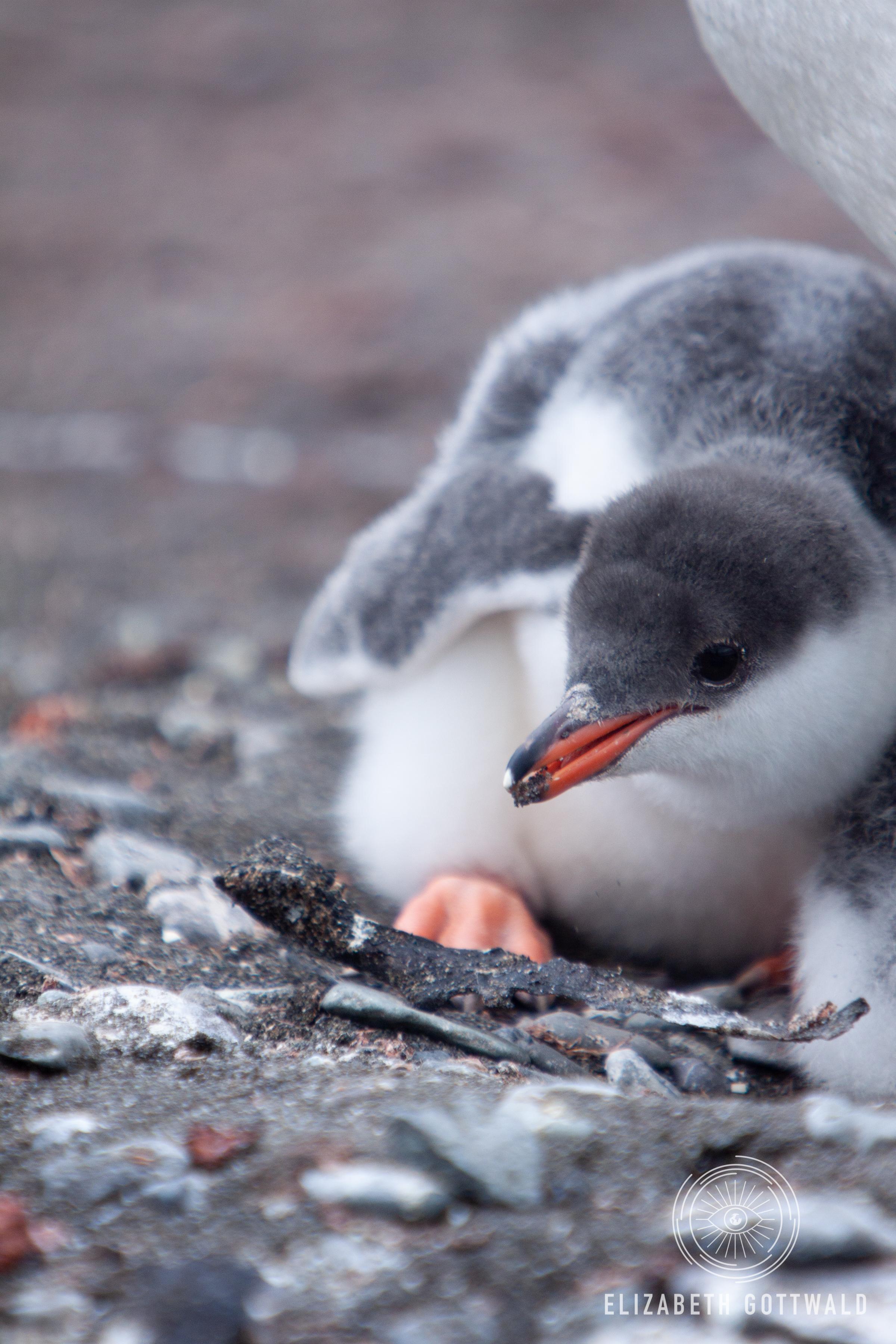 Antarctica-4965.jpg