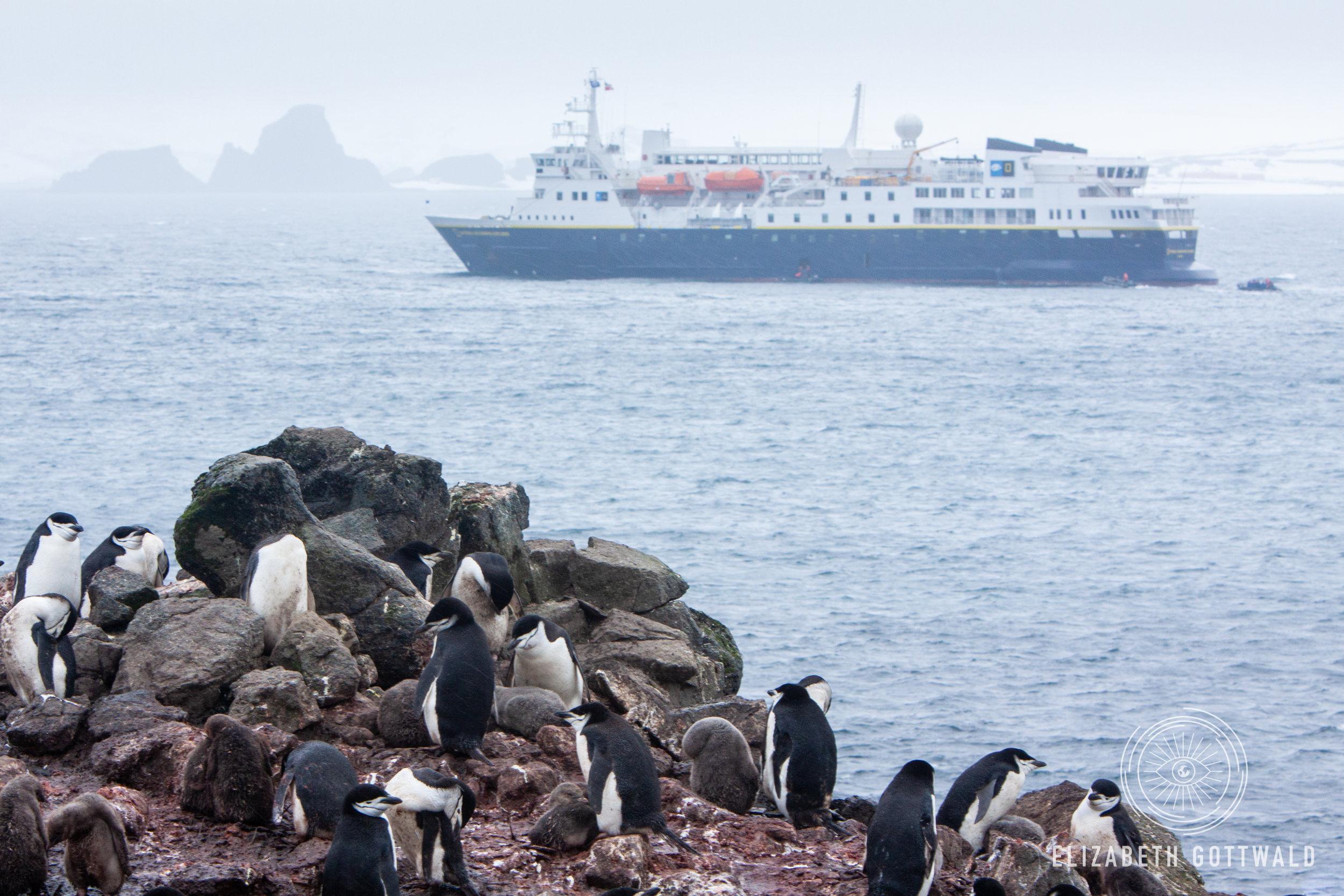 Antarctica-4995.jpg