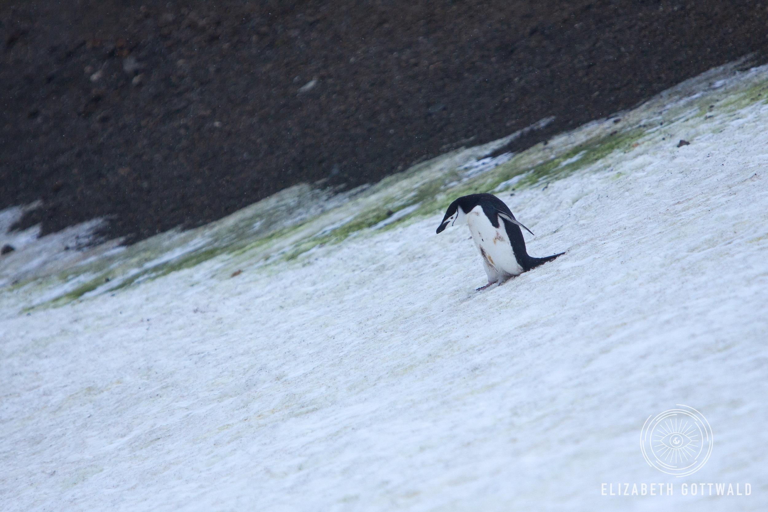 Antarctica-4999.jpg