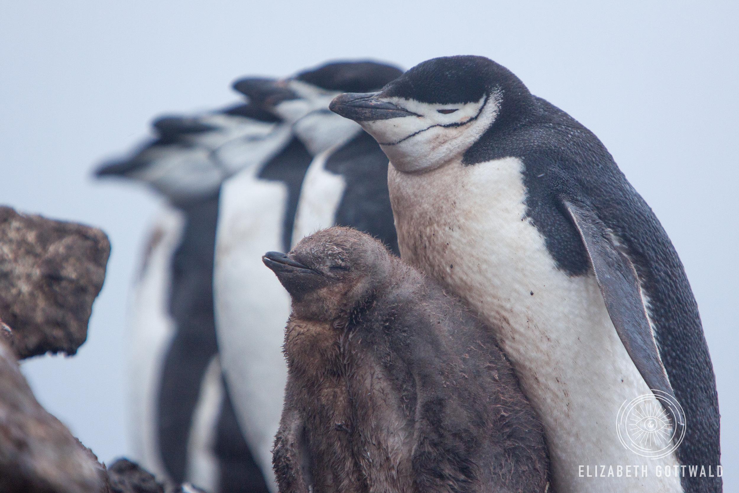 Antarctica-5009.jpg