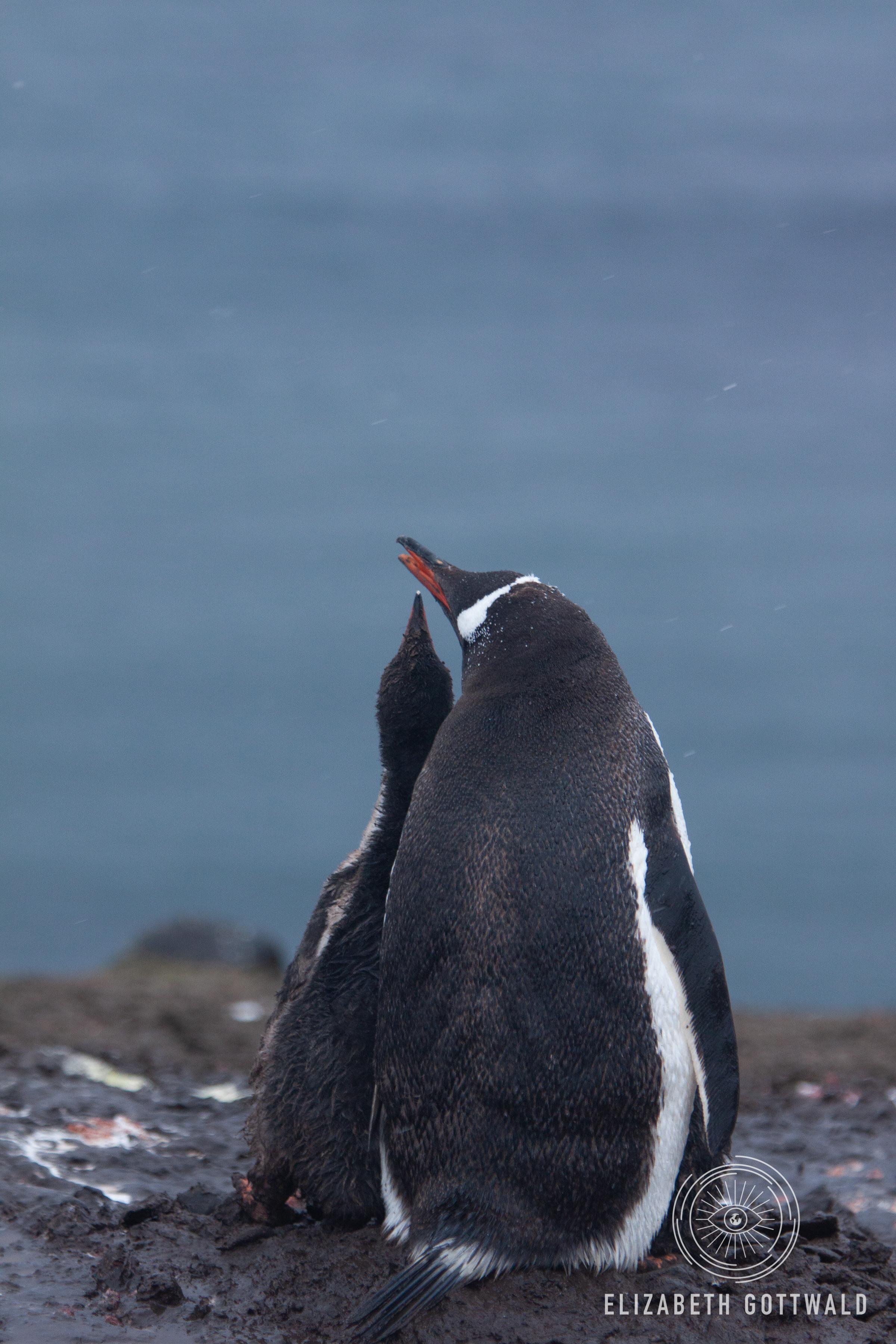 Antarctica-5025.jpg