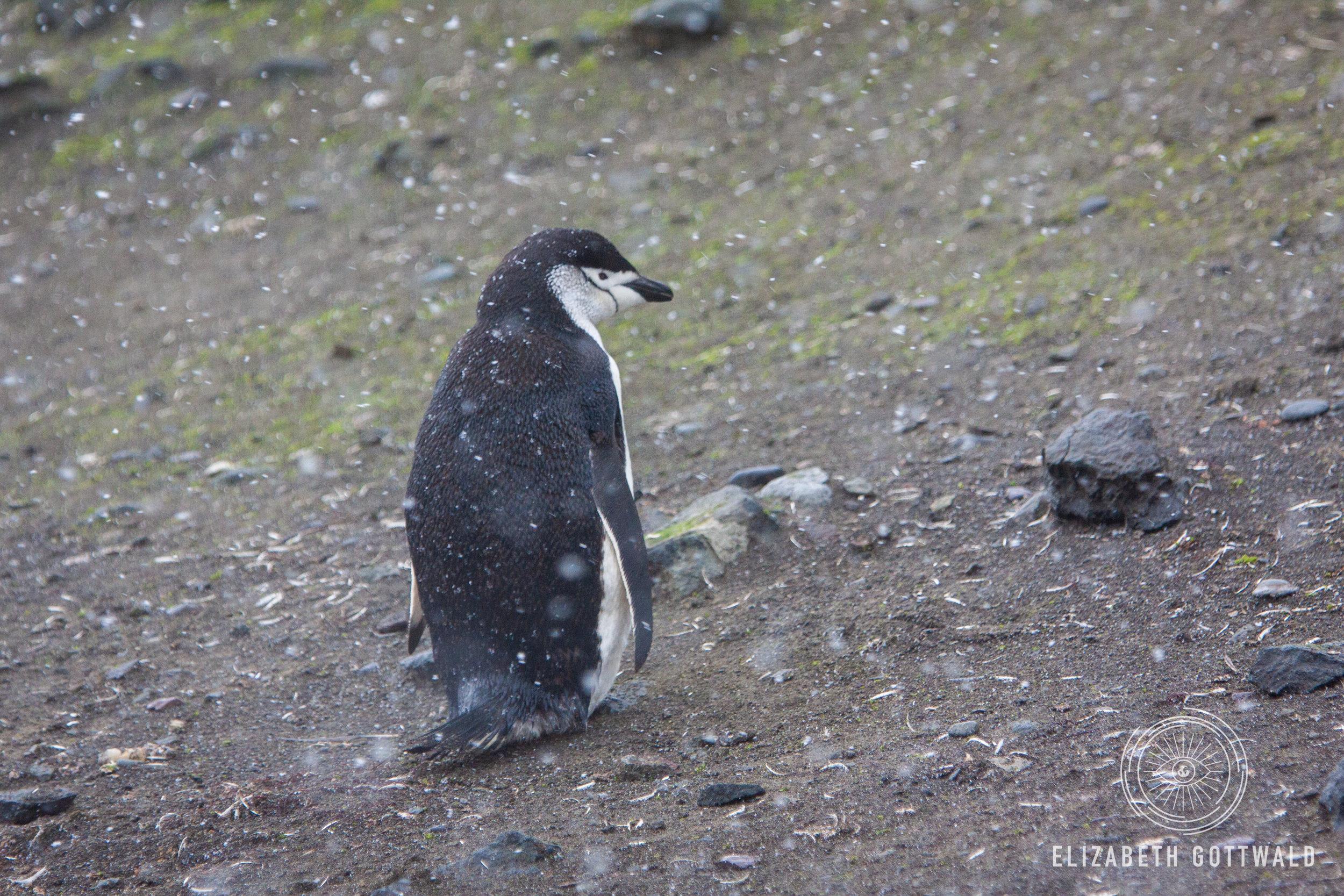 Antarctica-5032.jpg