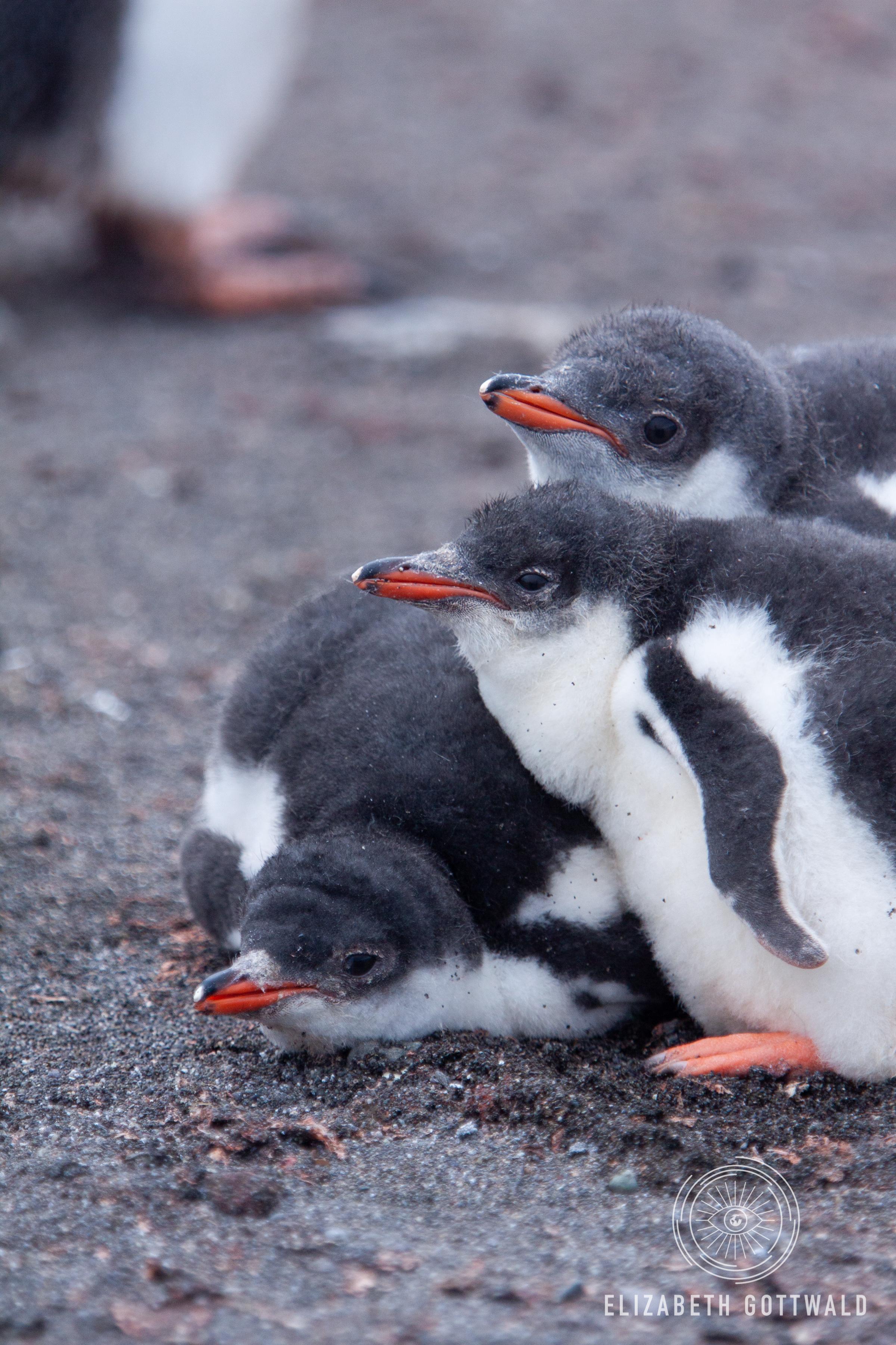 Antarctica-4969.jpg