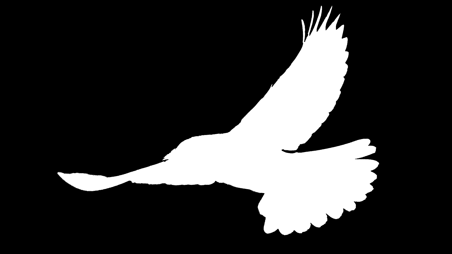 White Bird over Black Background.png