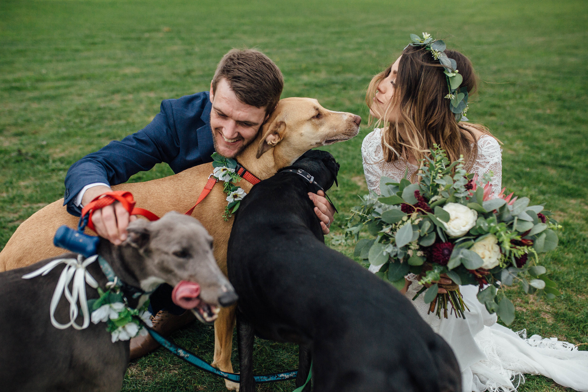 Sheffield Yorkshire Documentary Wedding Photographer Dogs at Weddings