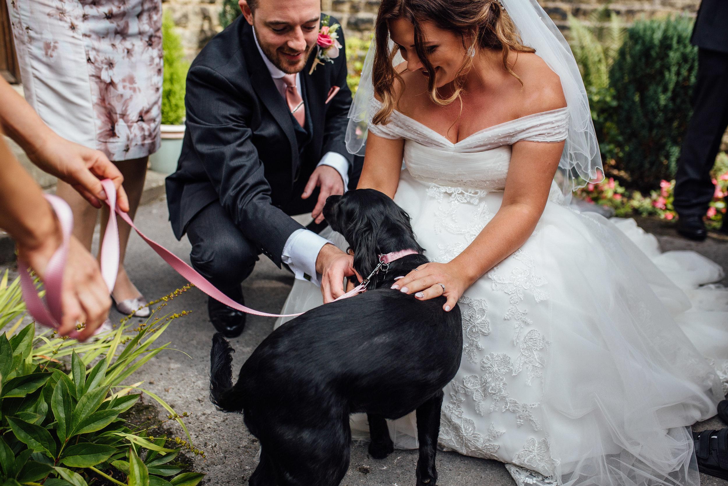 Sheffield Wedding Photographer Dogs at Weddings