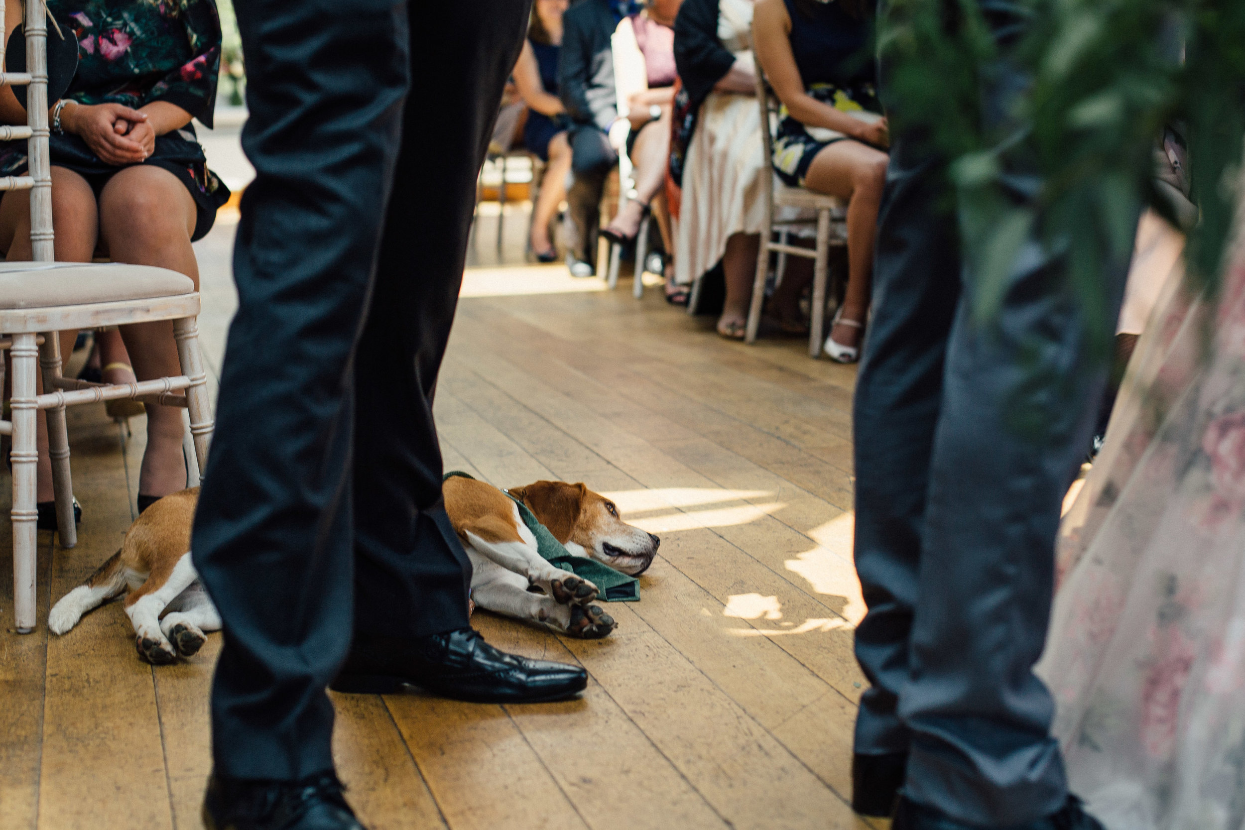 Sheffield Wedding Photographer Dogs at Weddings Losehill House