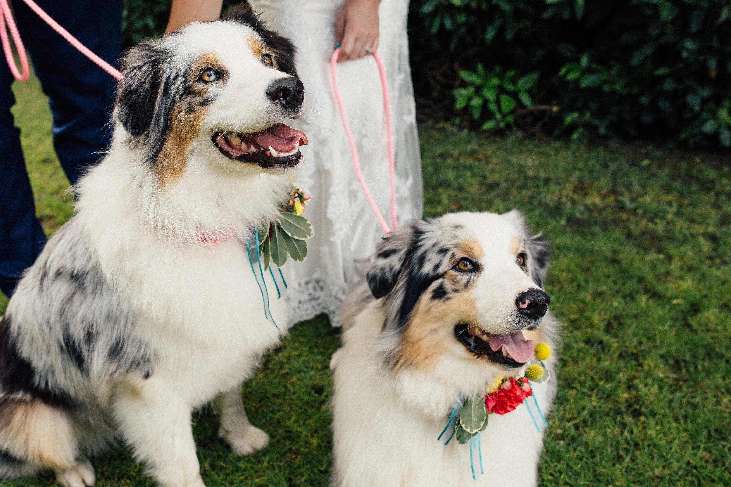 Sheffield Wedding Photographer Dogs at Weddings The Faversham